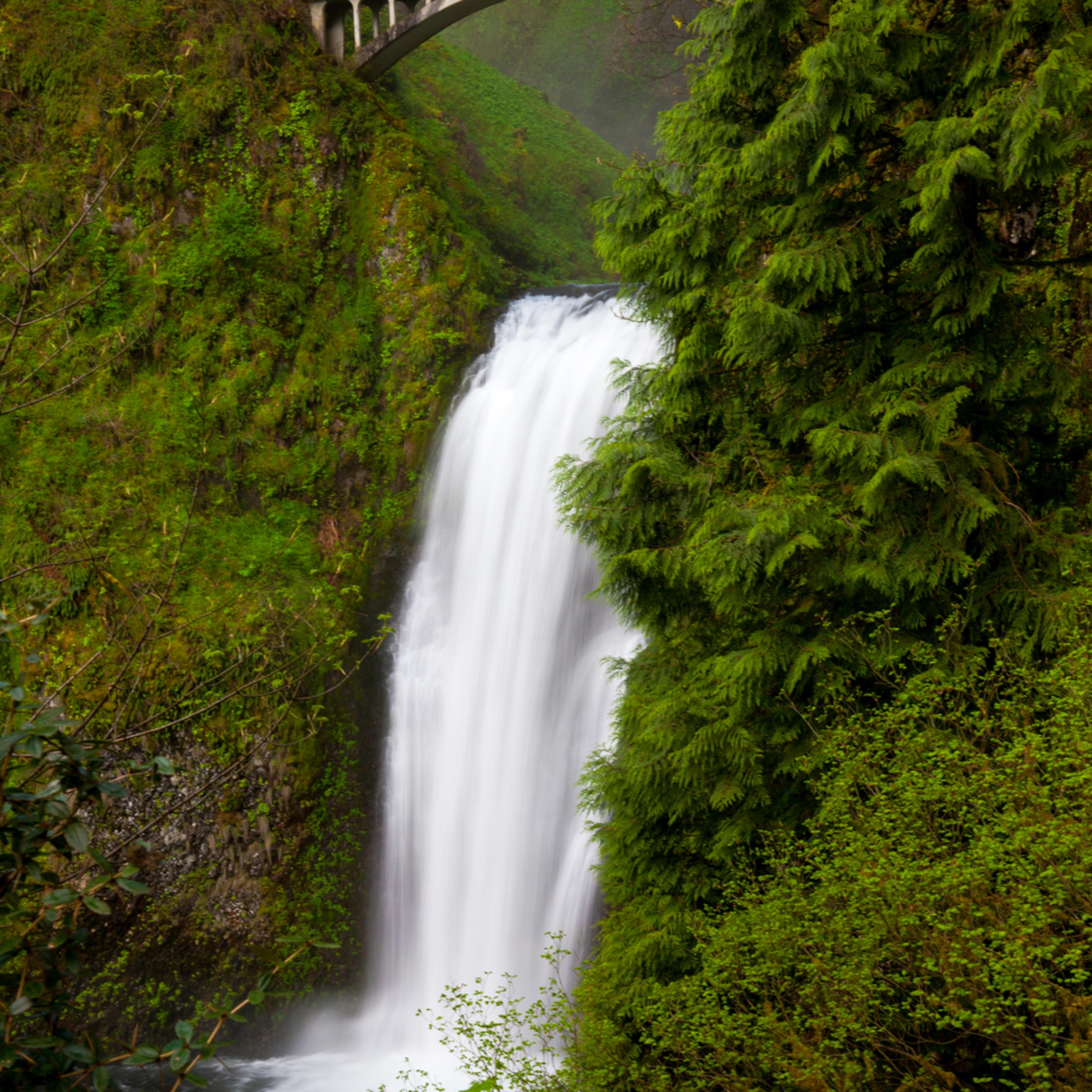 Oregon 20090511 032 mhstho