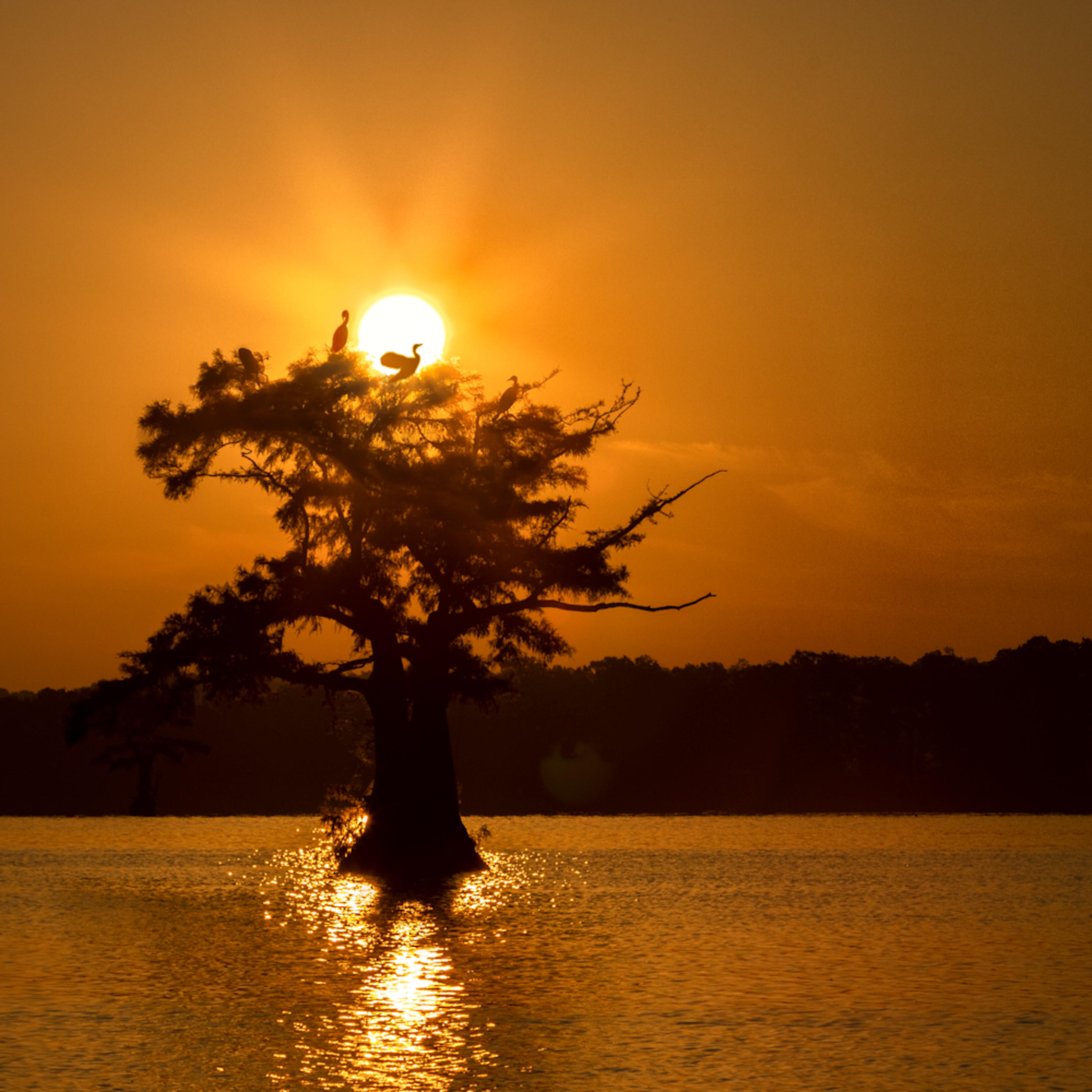 Sunsize cormorant tree  tm mg 8534 rlt20 mnp45o