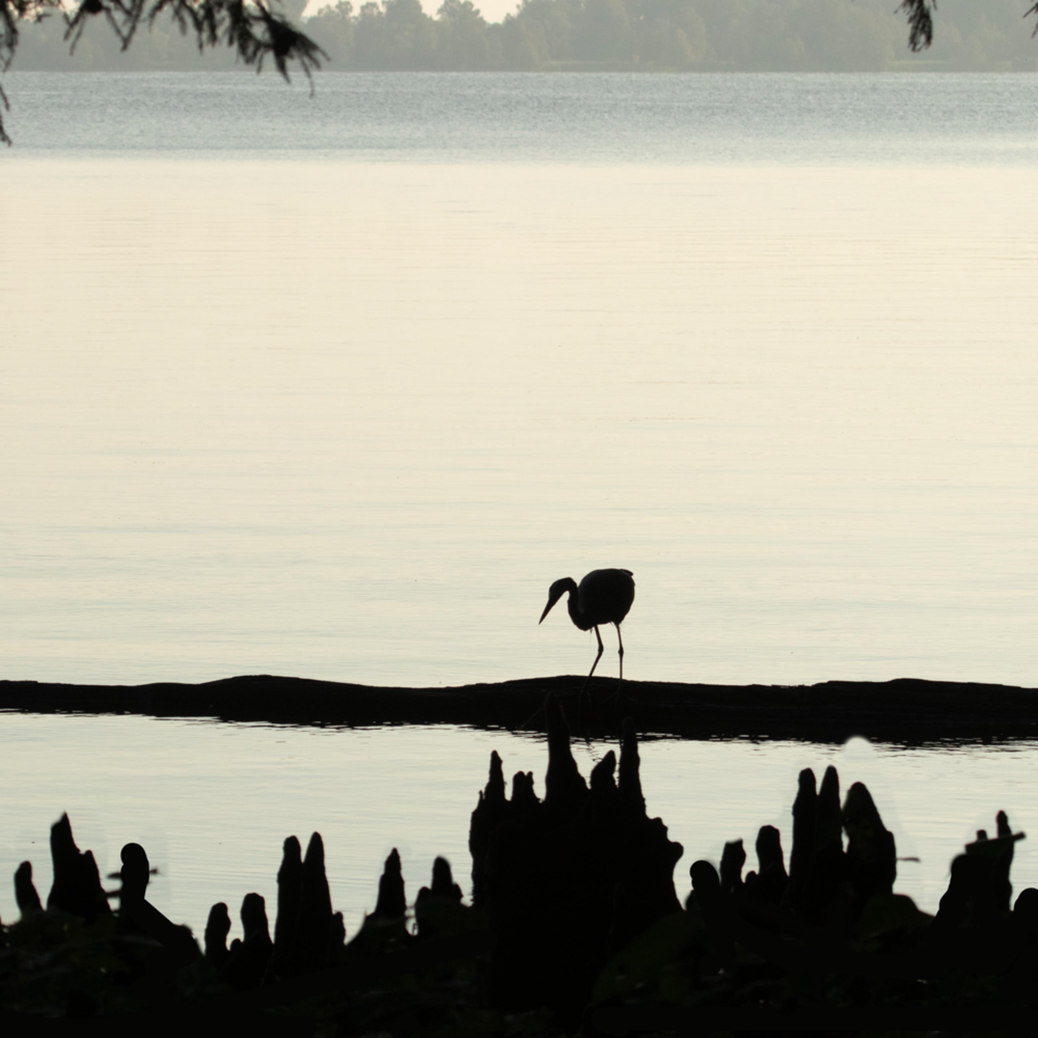 Heron silhouettes mg 7511 srm20 nxuhfh