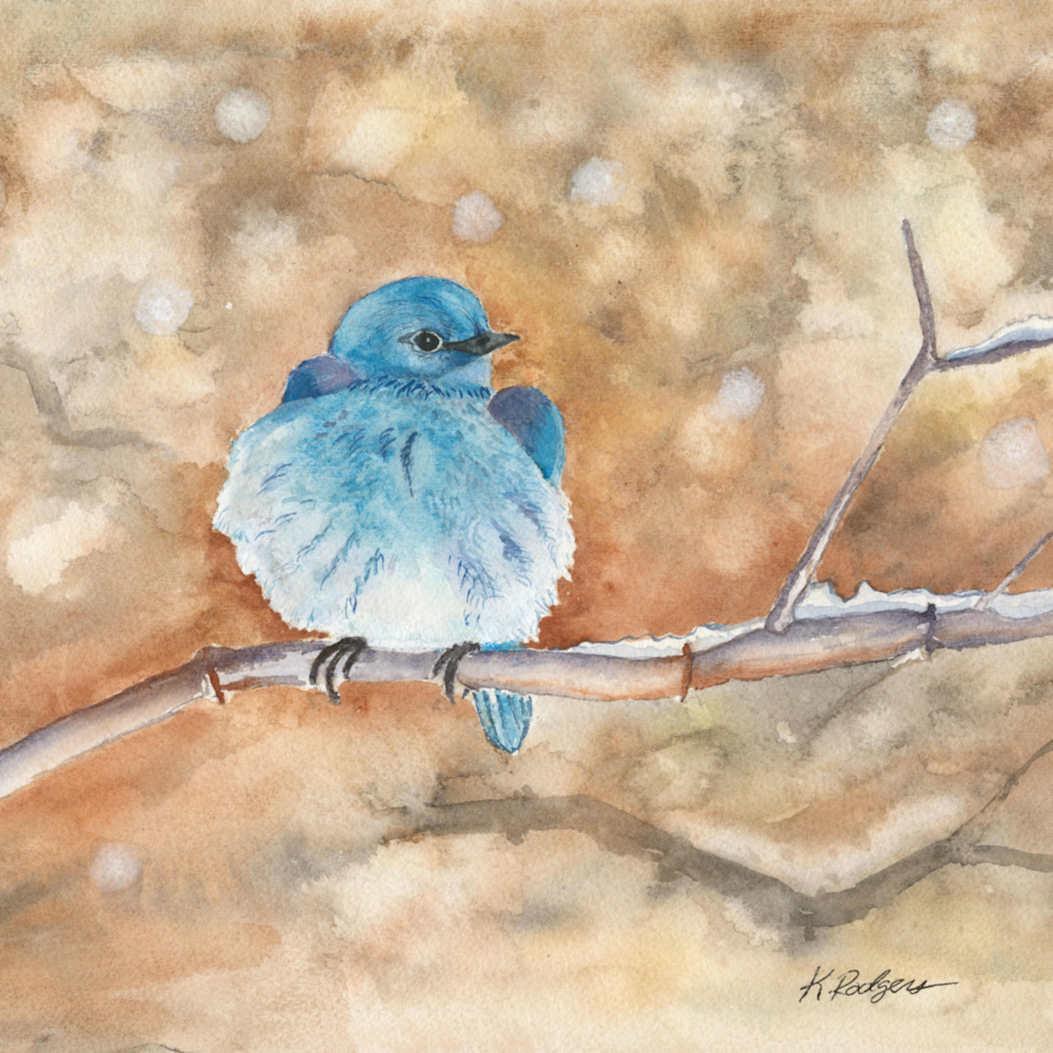 Bluebird dvd3vq