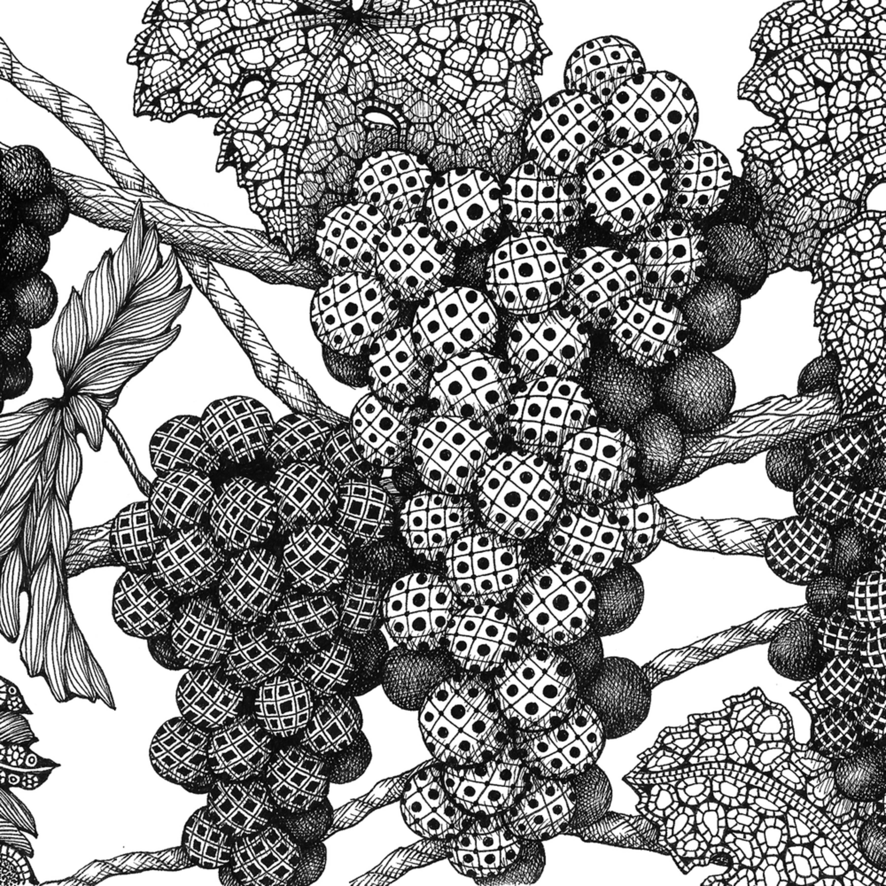 Grapes on the vine uw3vhi