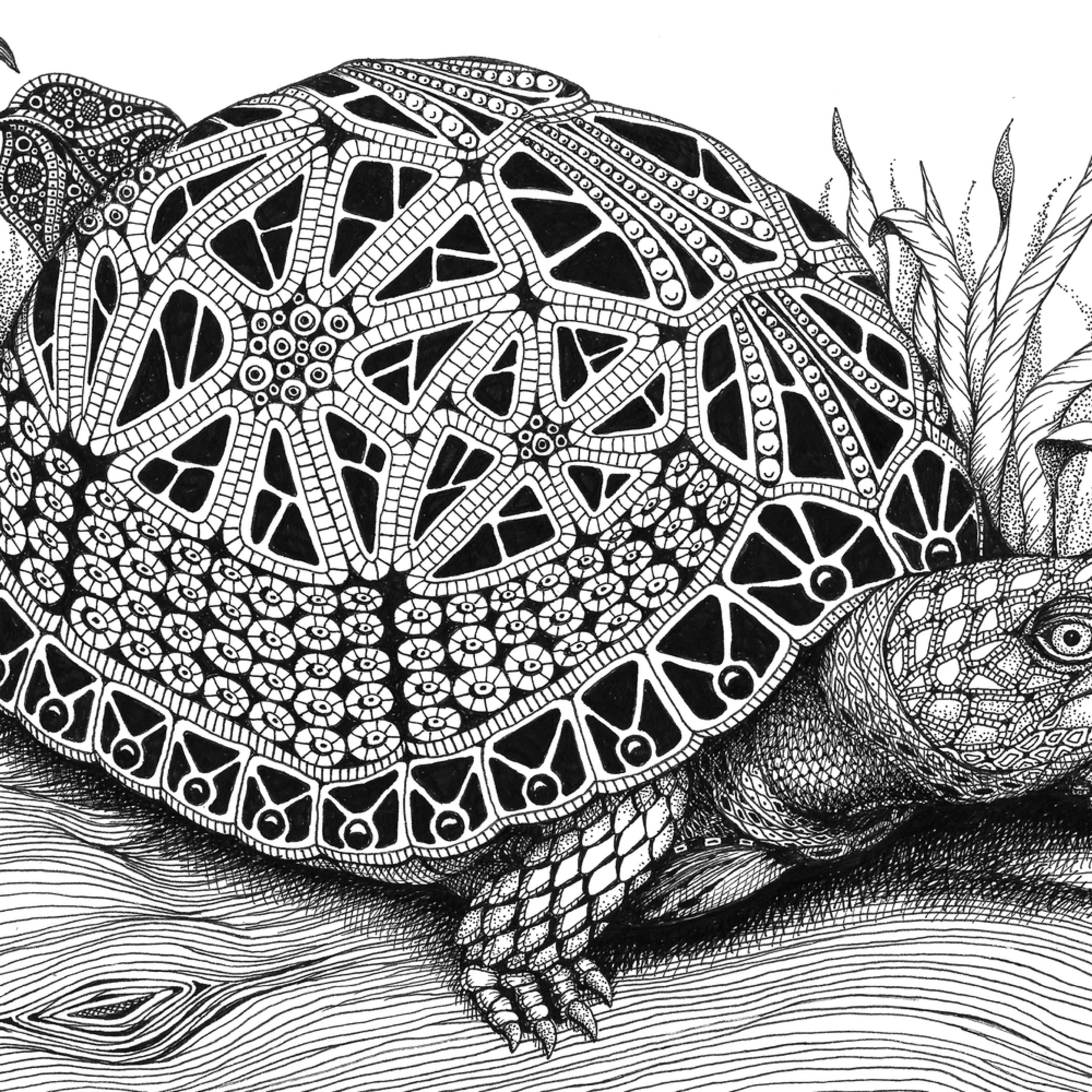Turtle  box turtle fxoxou