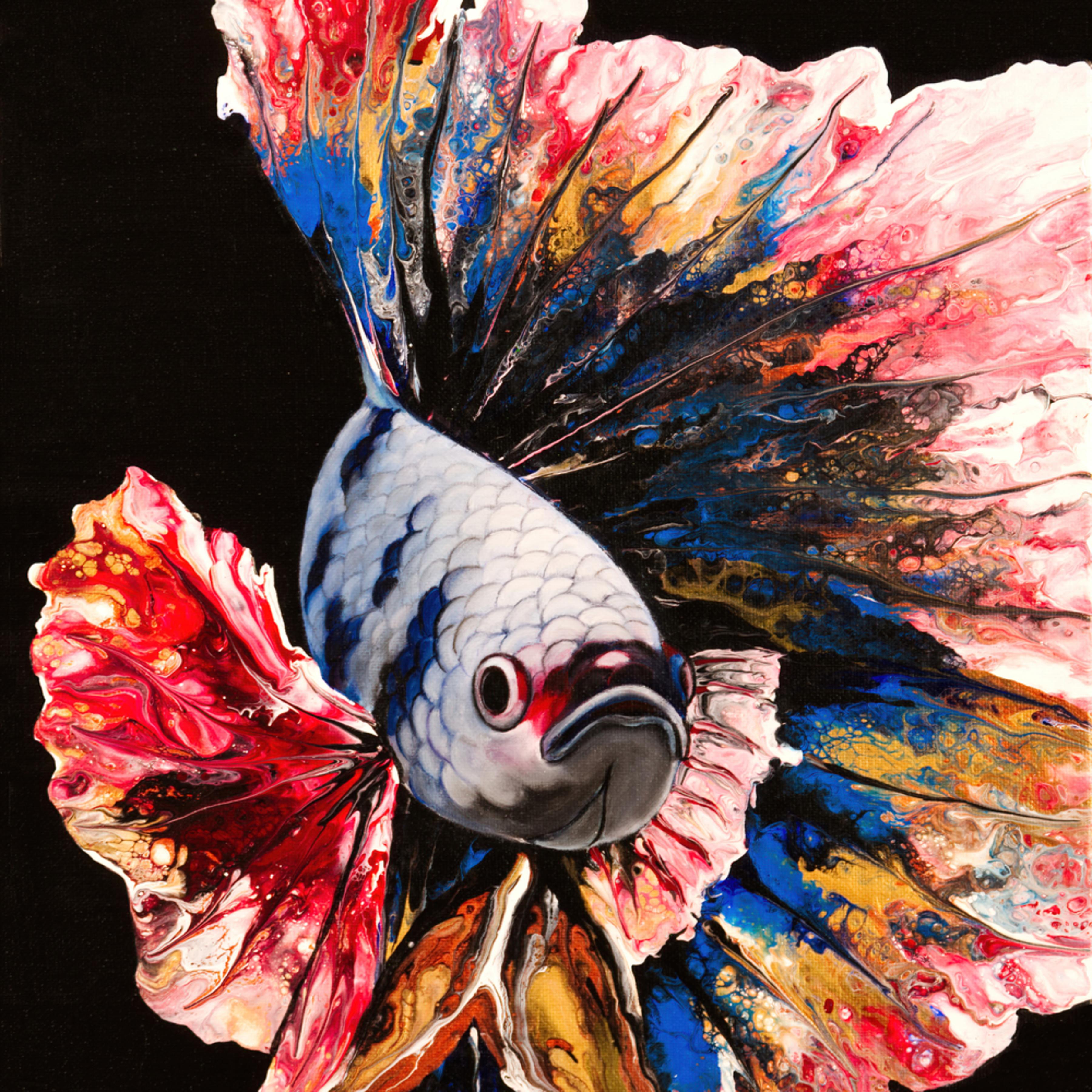 Rainbow betta fish full u5aolo