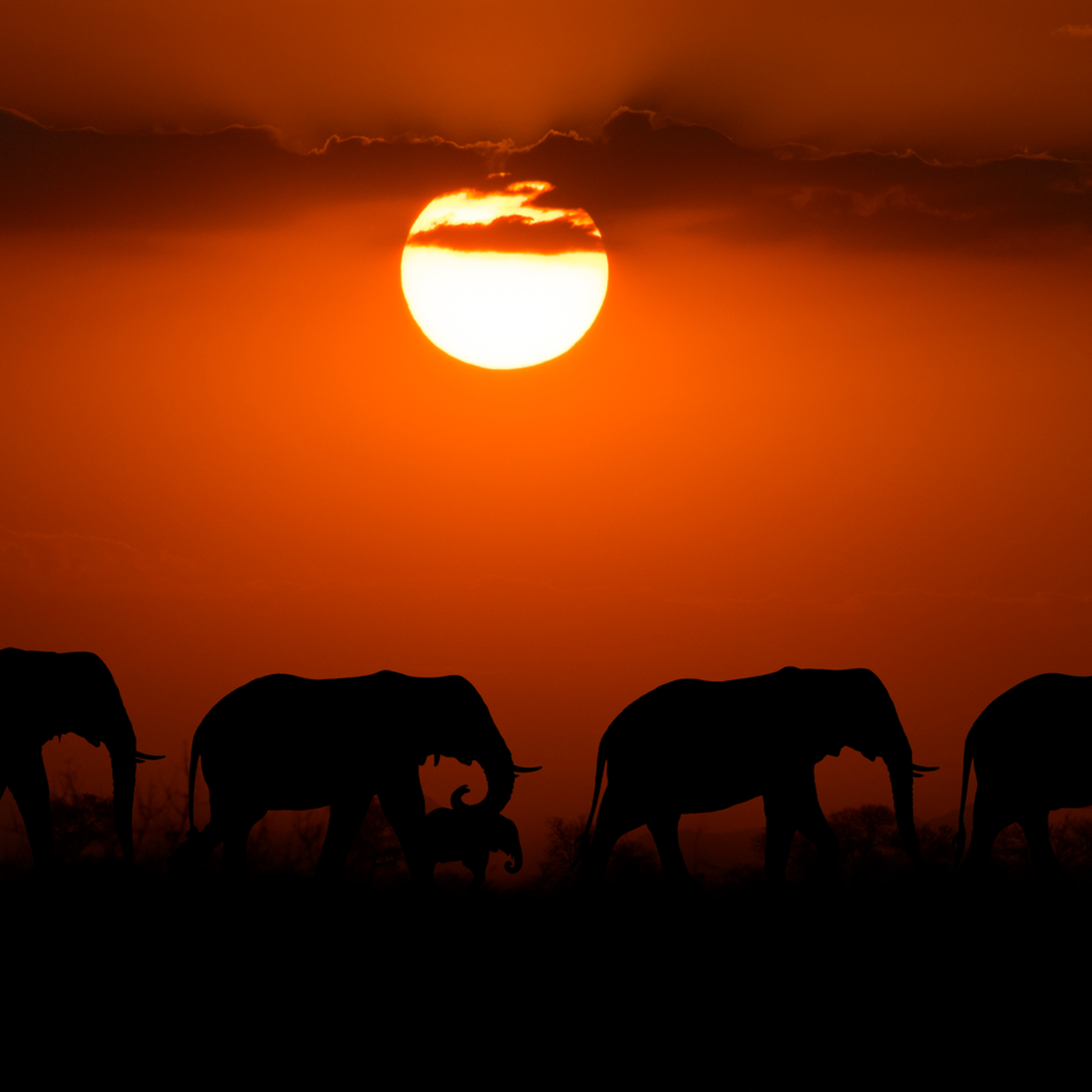 Elephants silhouette sun v2 12x18 sig n5oeki