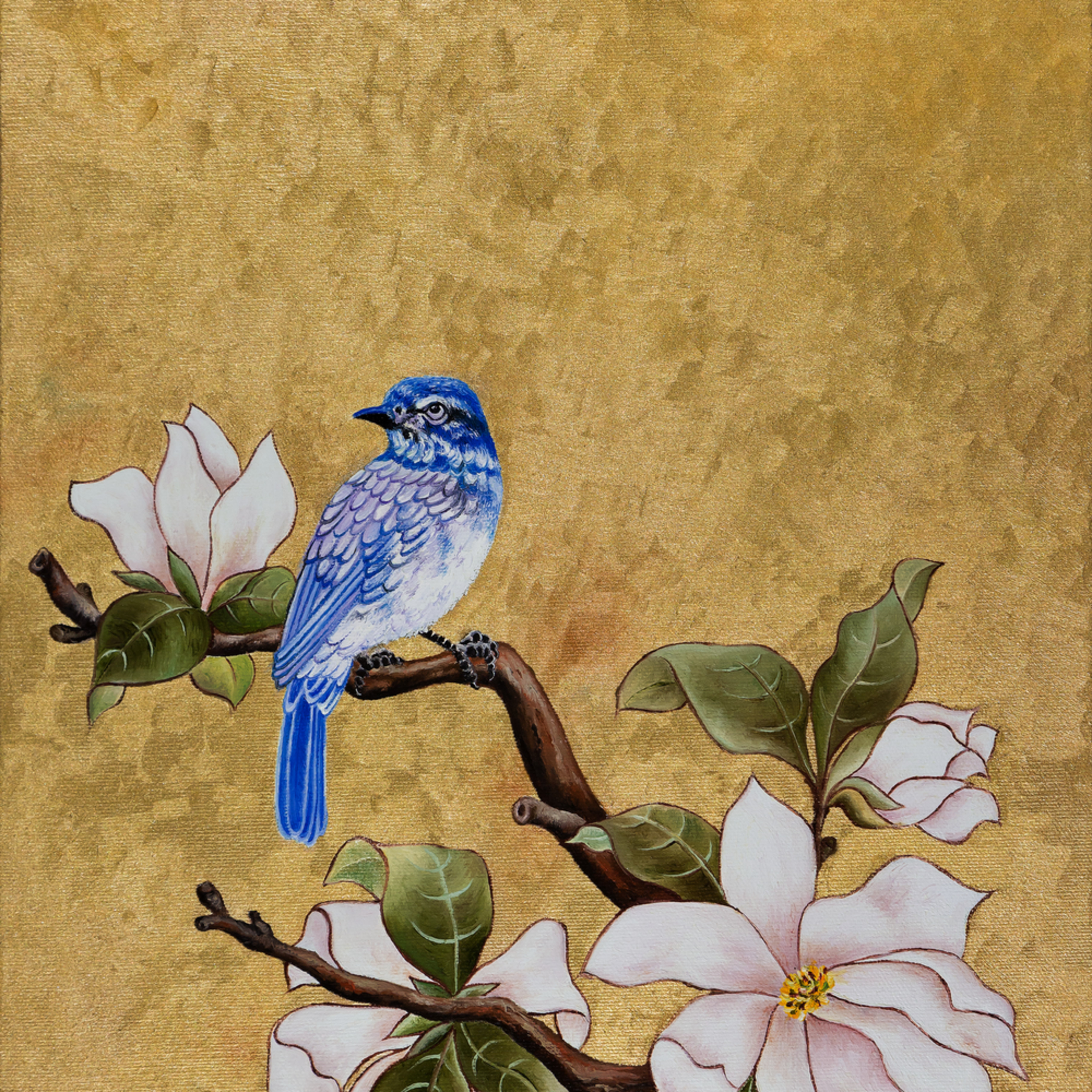 Blue bird 29a2824 sized sharpprint bopyeo