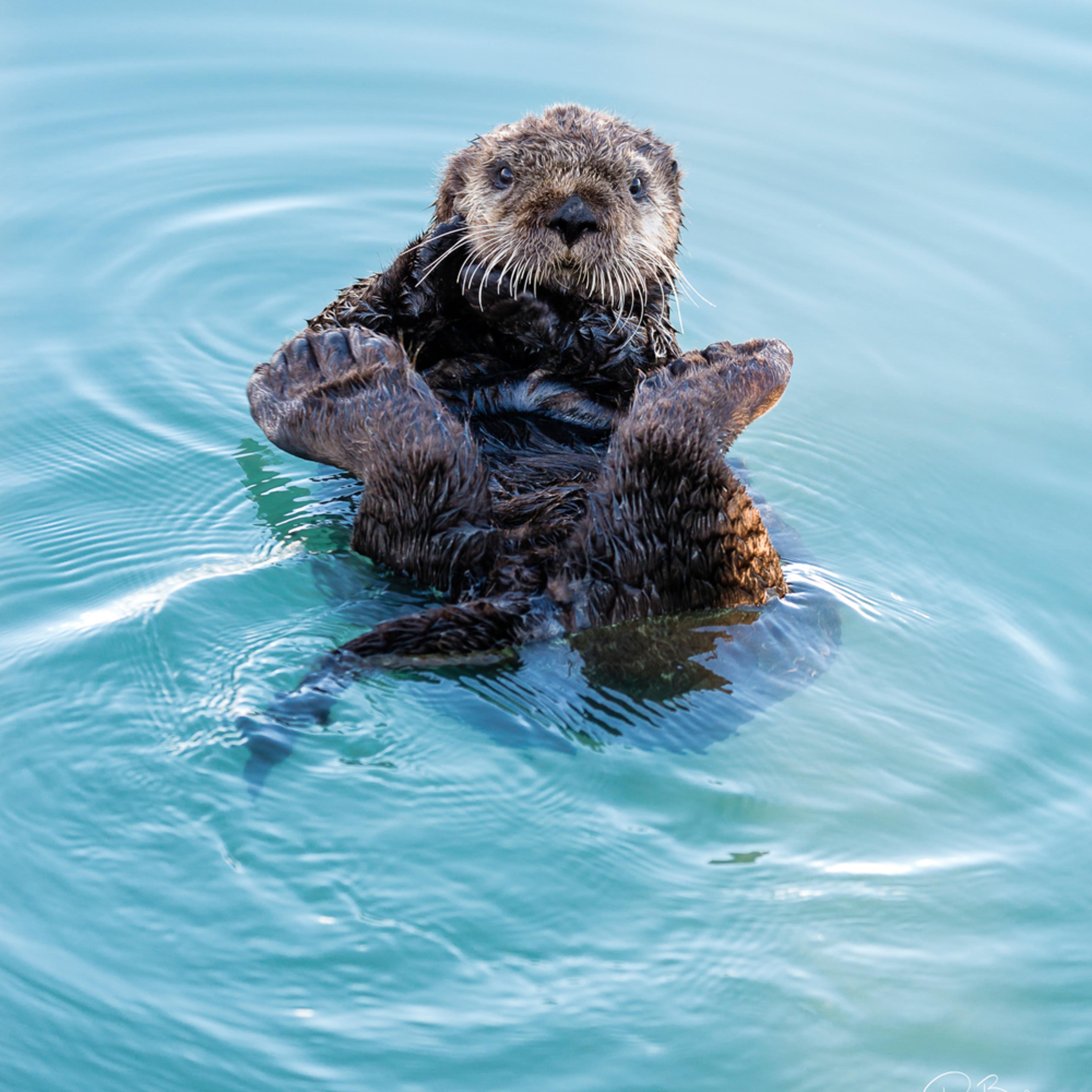 20160607 sea otter 38717 artstorefronts clf1hi