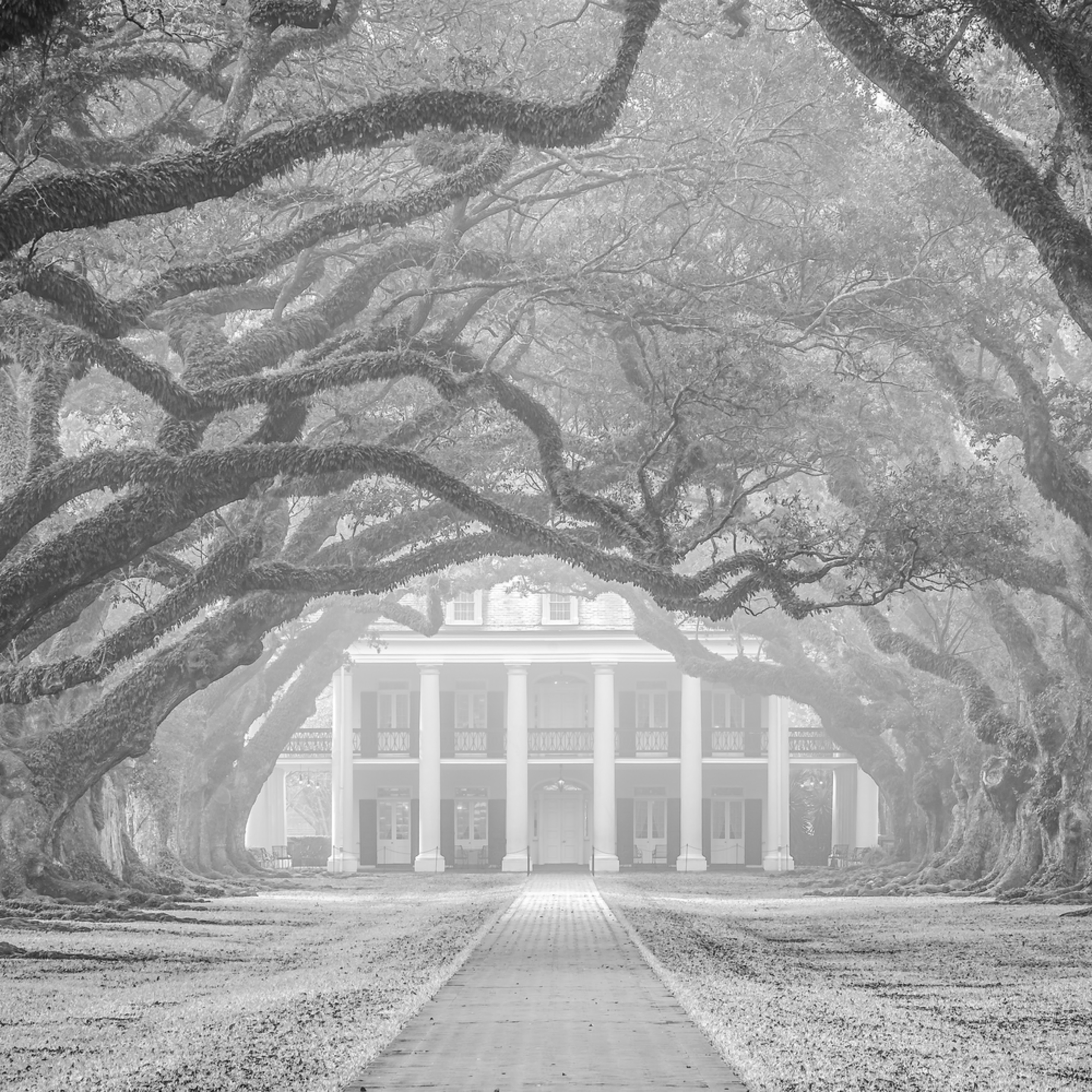 Andy crawford photography oak alley plantation 20180215 1 jjc4wh