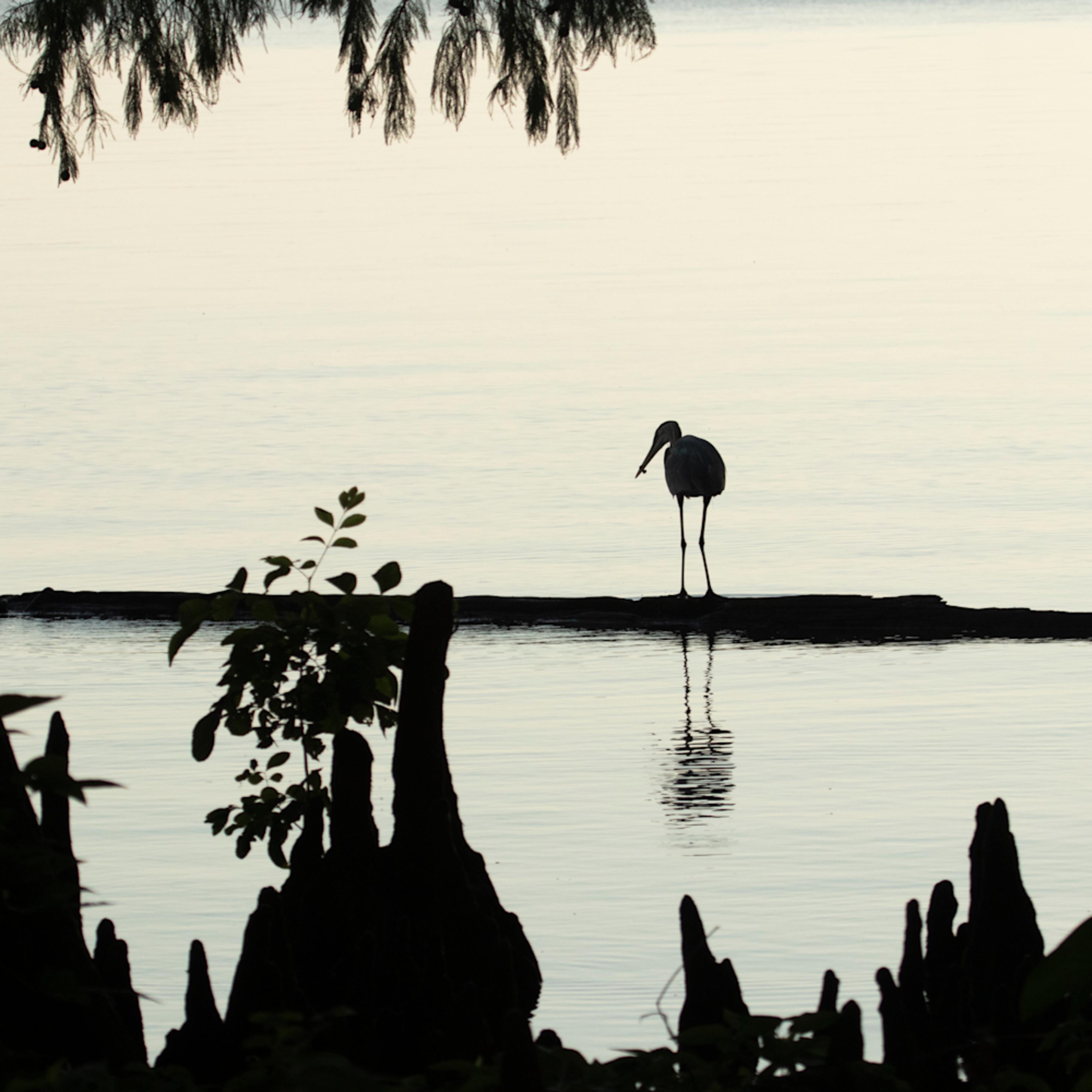 Heron silhouettes mg 7526 srm20 kxgpyj