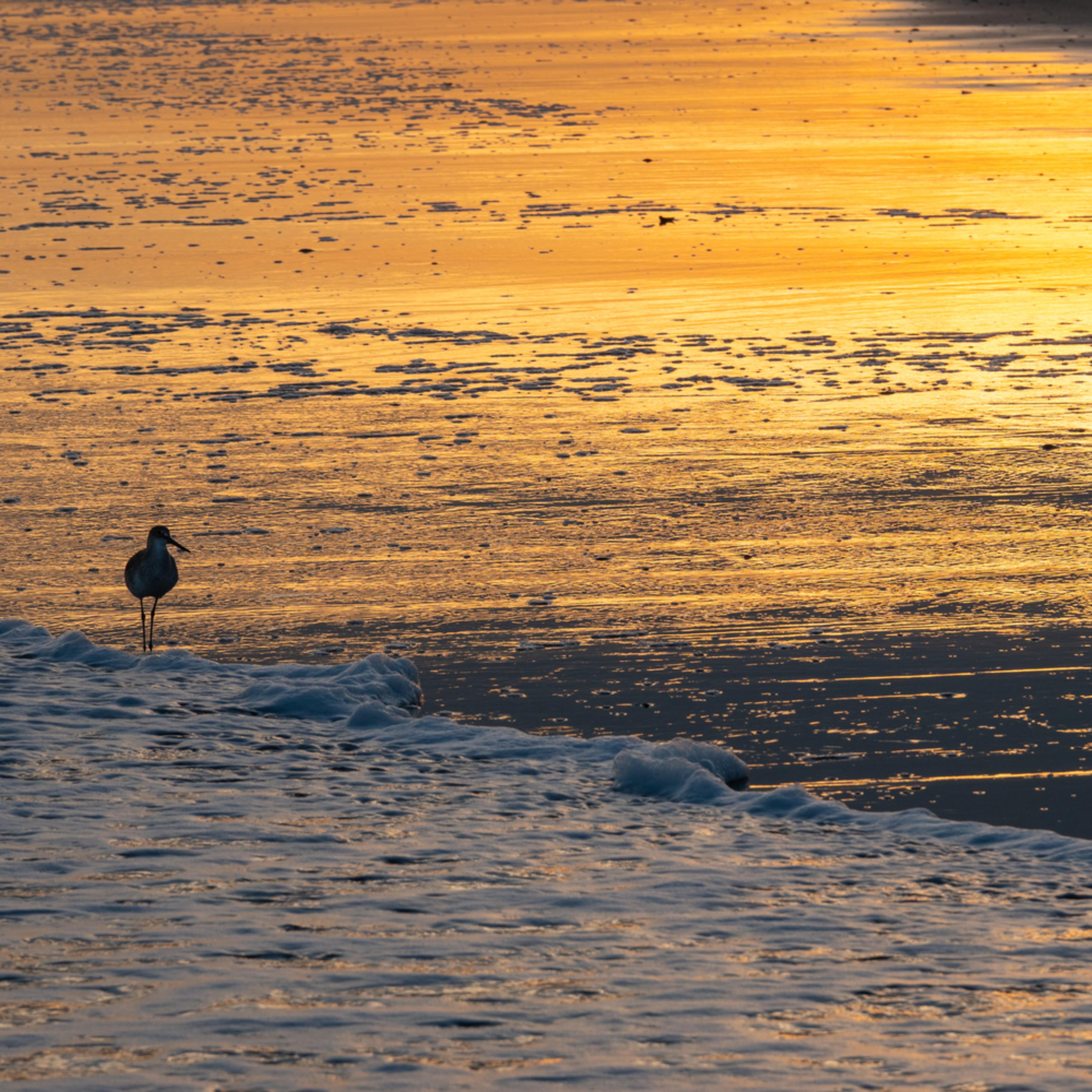 Sandpiper sunset dsc6713 l6nnoz