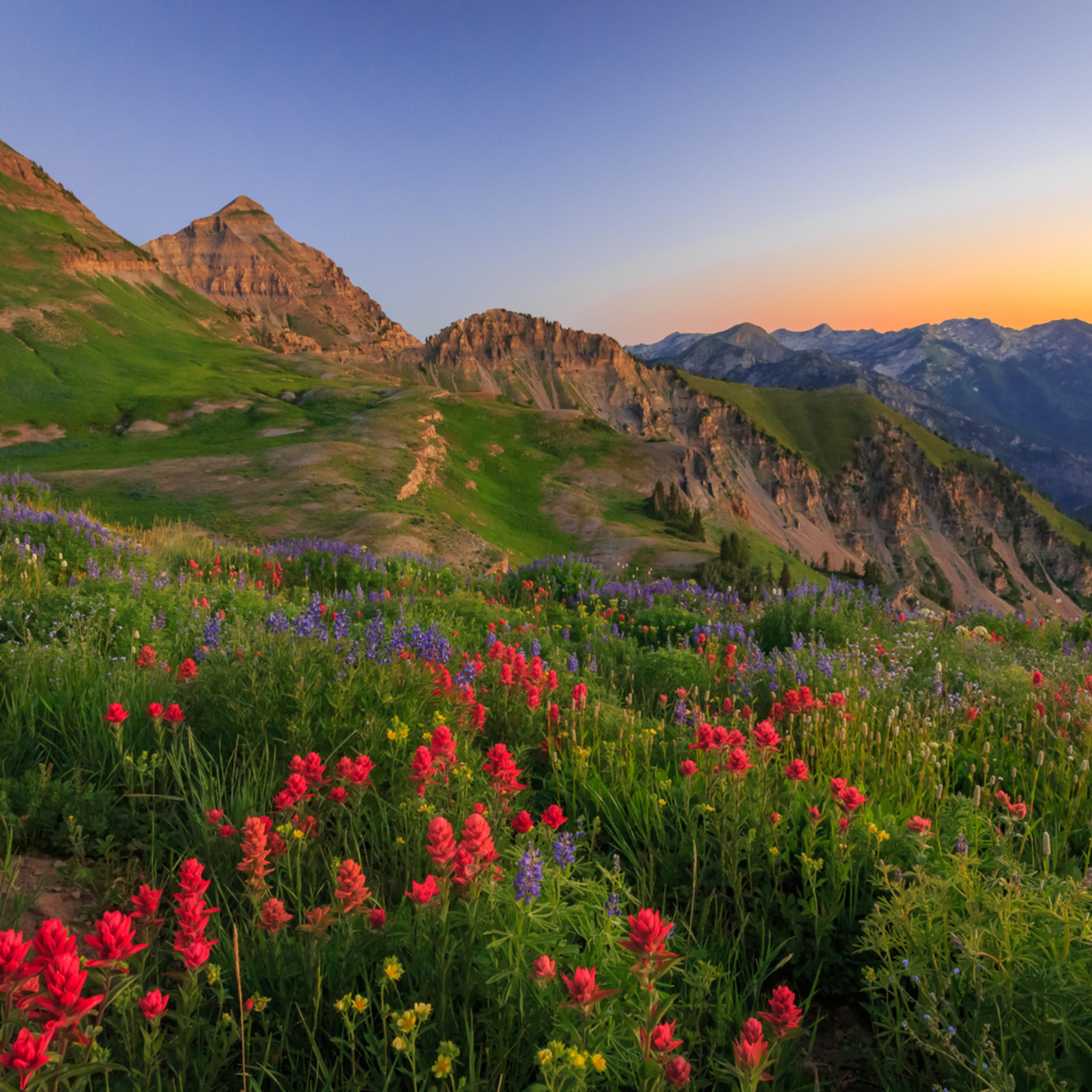 Wasatch wildflowers in dawn light f69kf0