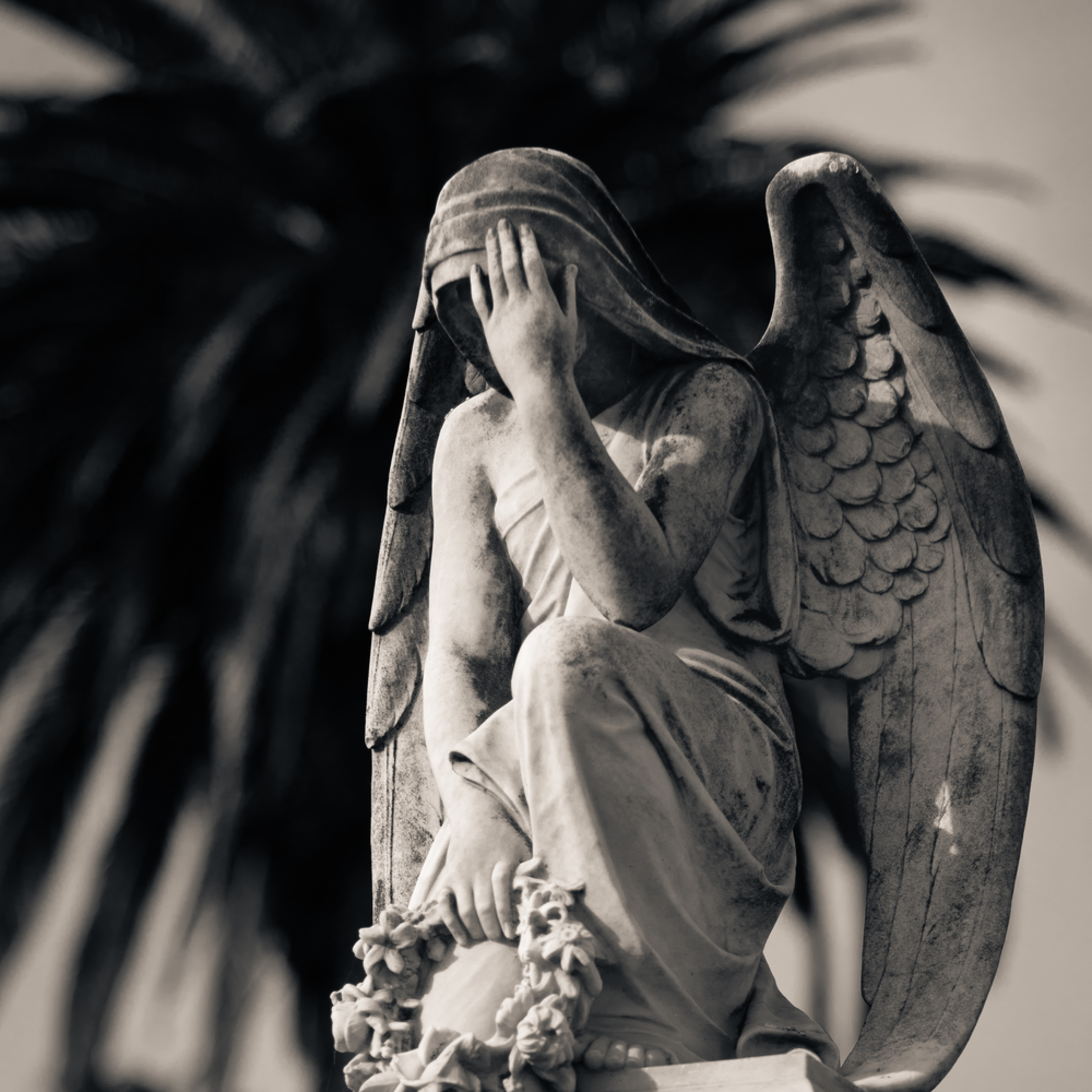 Weeping angel and fan palm ipc ter302
