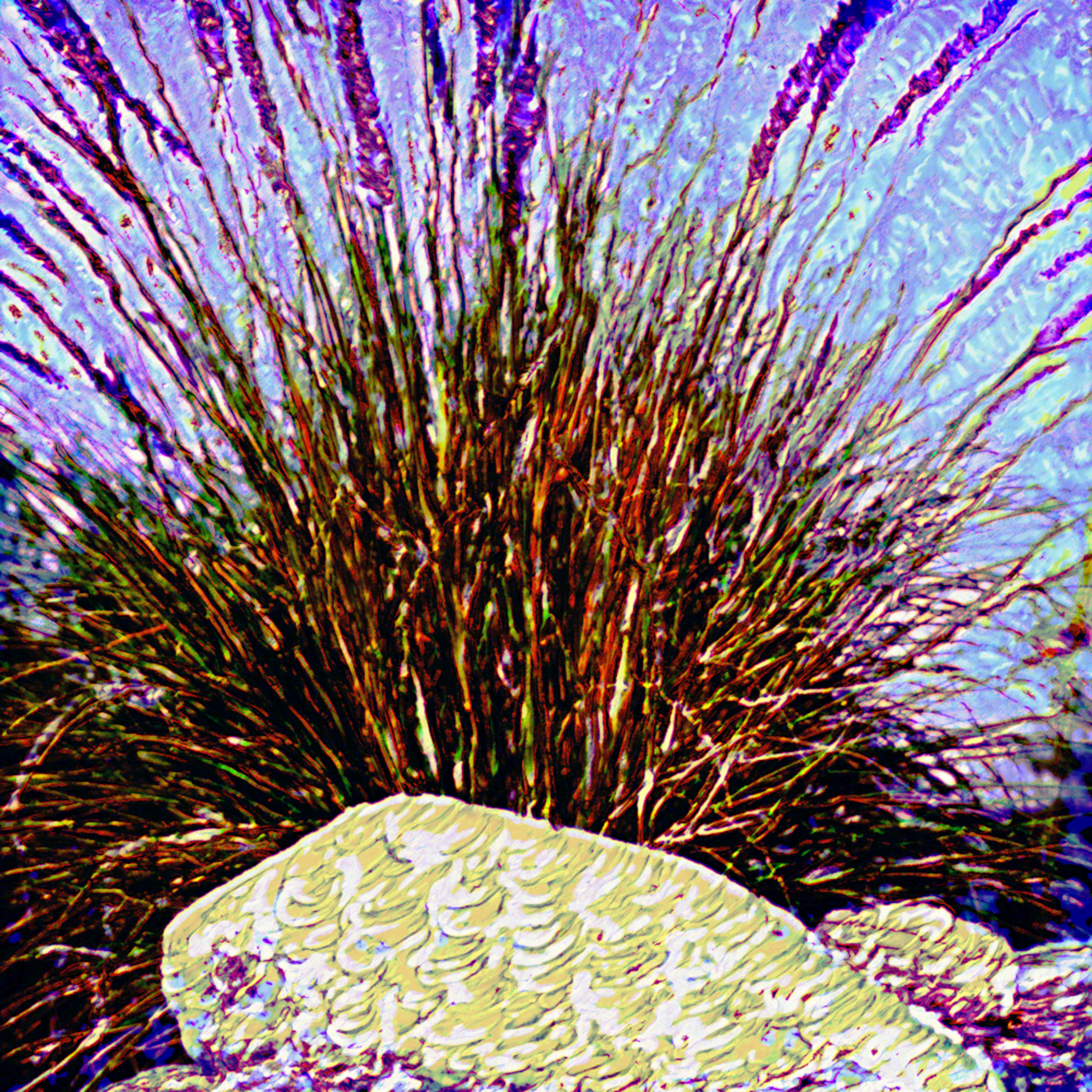 Purple grass hawlro