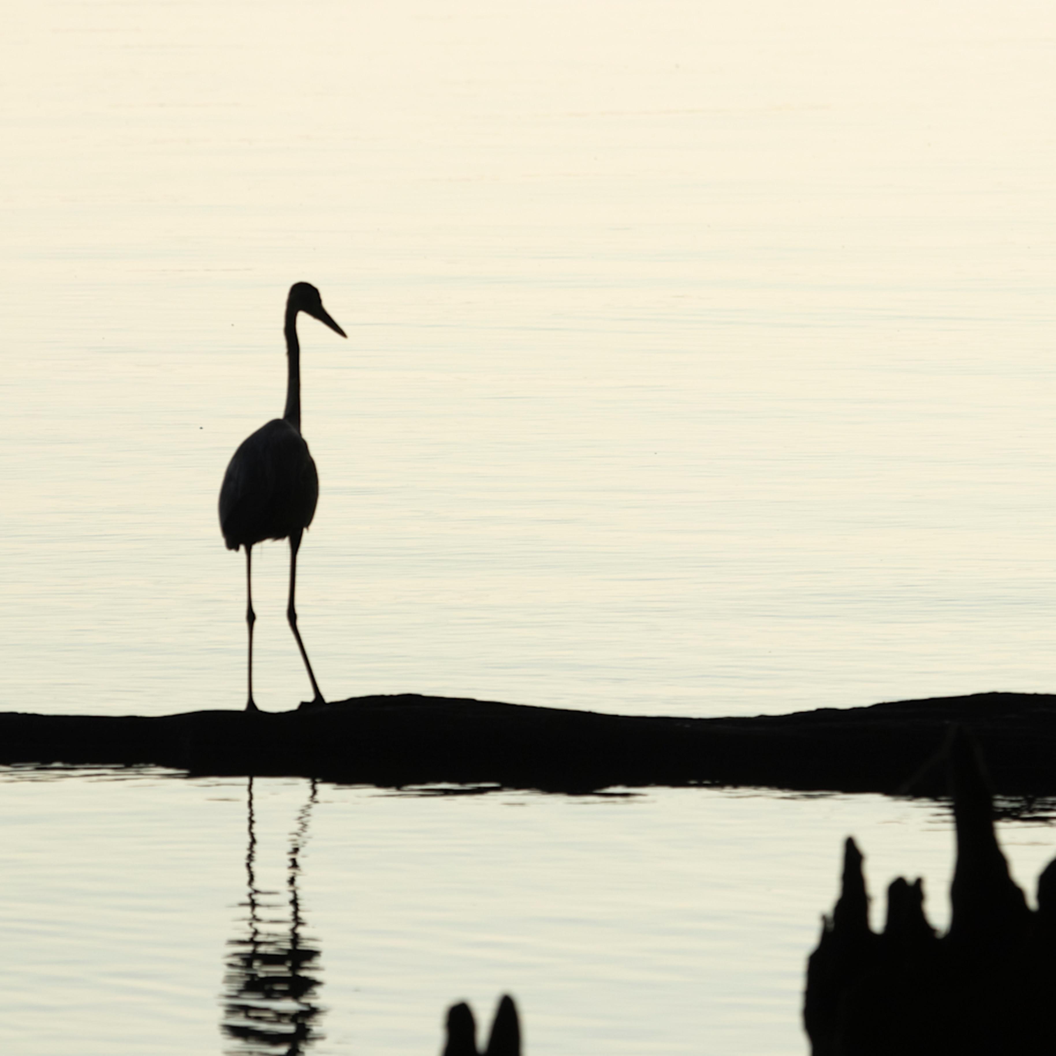 Heron silhouettes mg 7521 srm20 vf1jtv