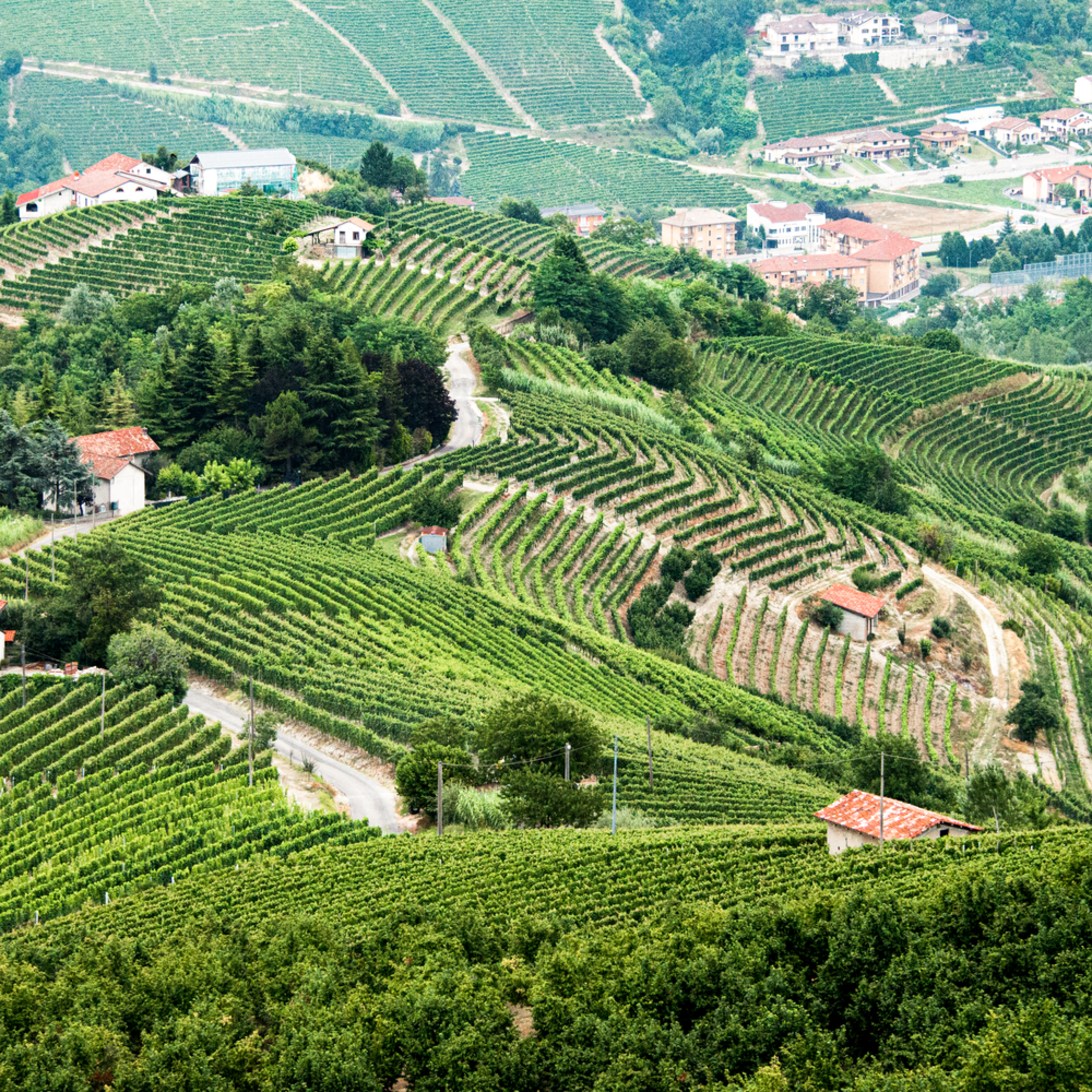 Northern italian vineyards aerial xyyxg9