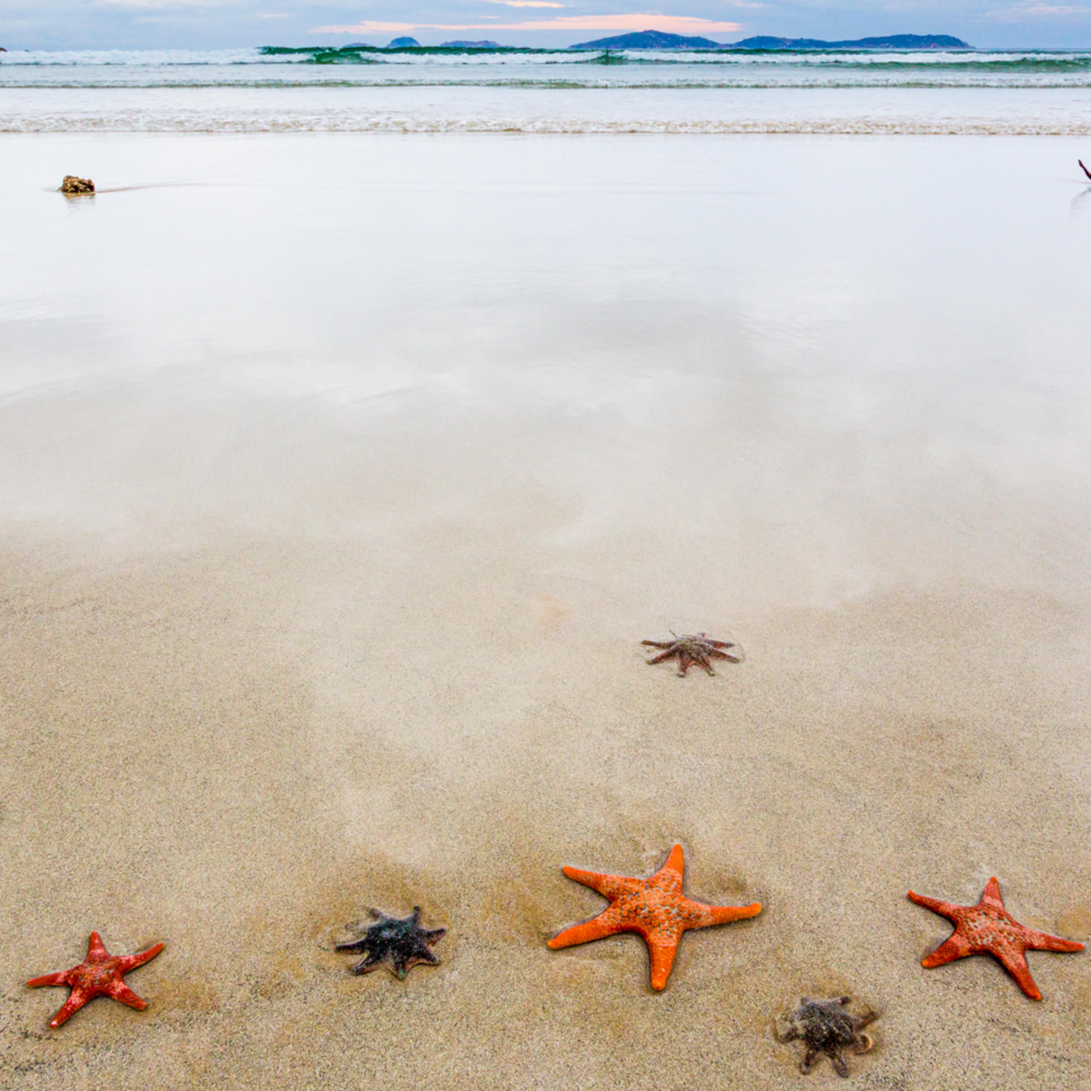 Starfish hgimzr