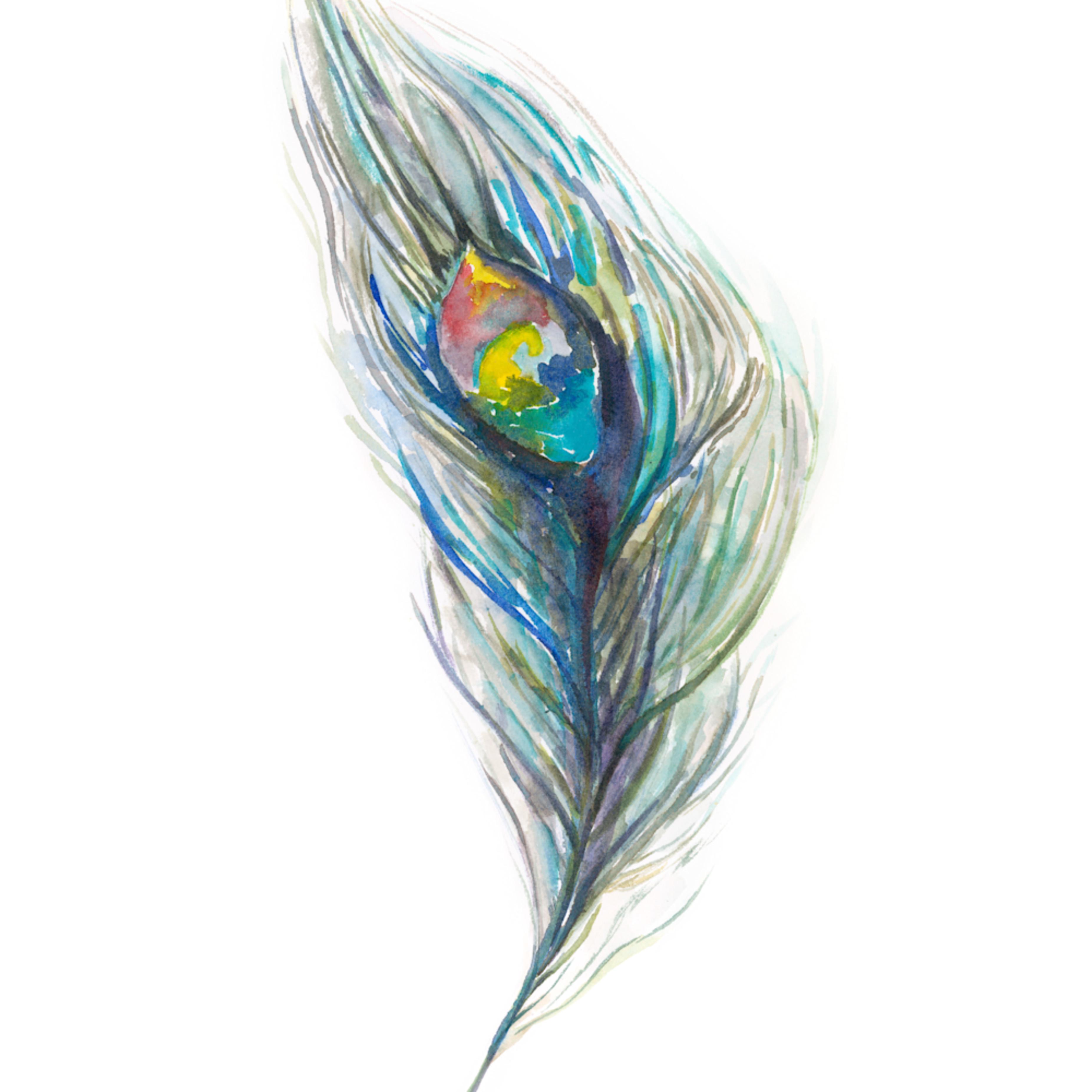 Peacockfeather dpegvh