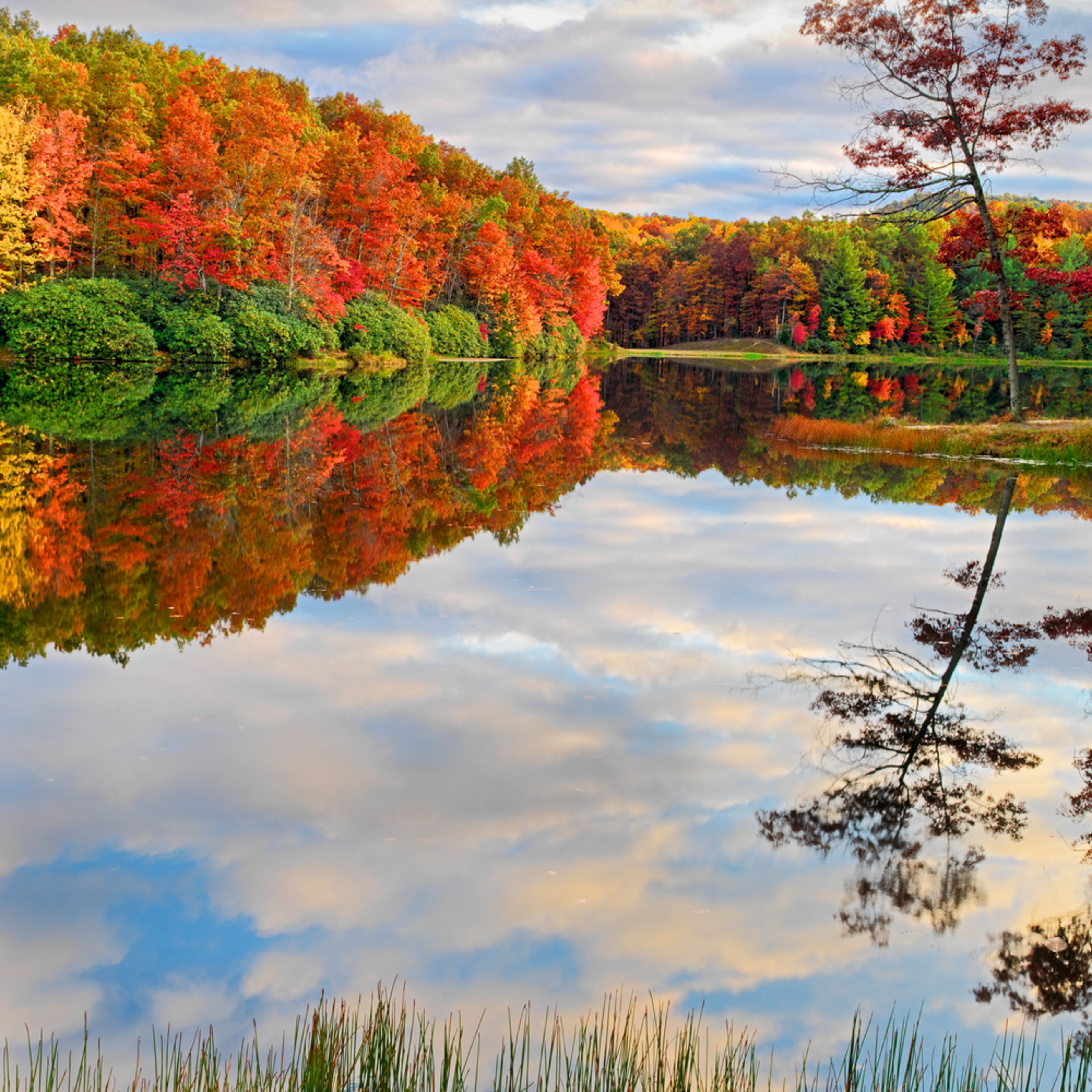 Autumn kaleidoscope ii q5lkde