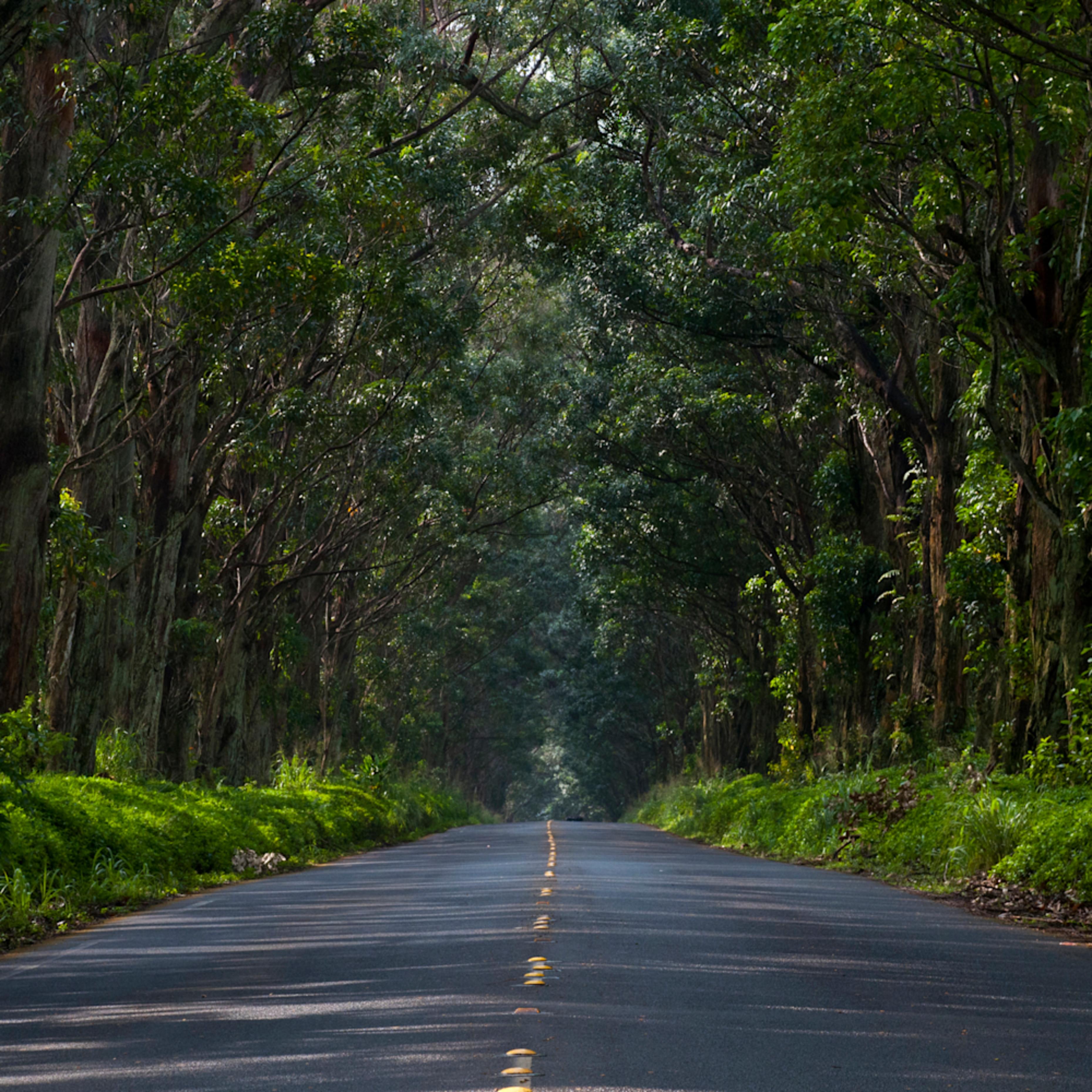 Tunnel of trees ia6vyk