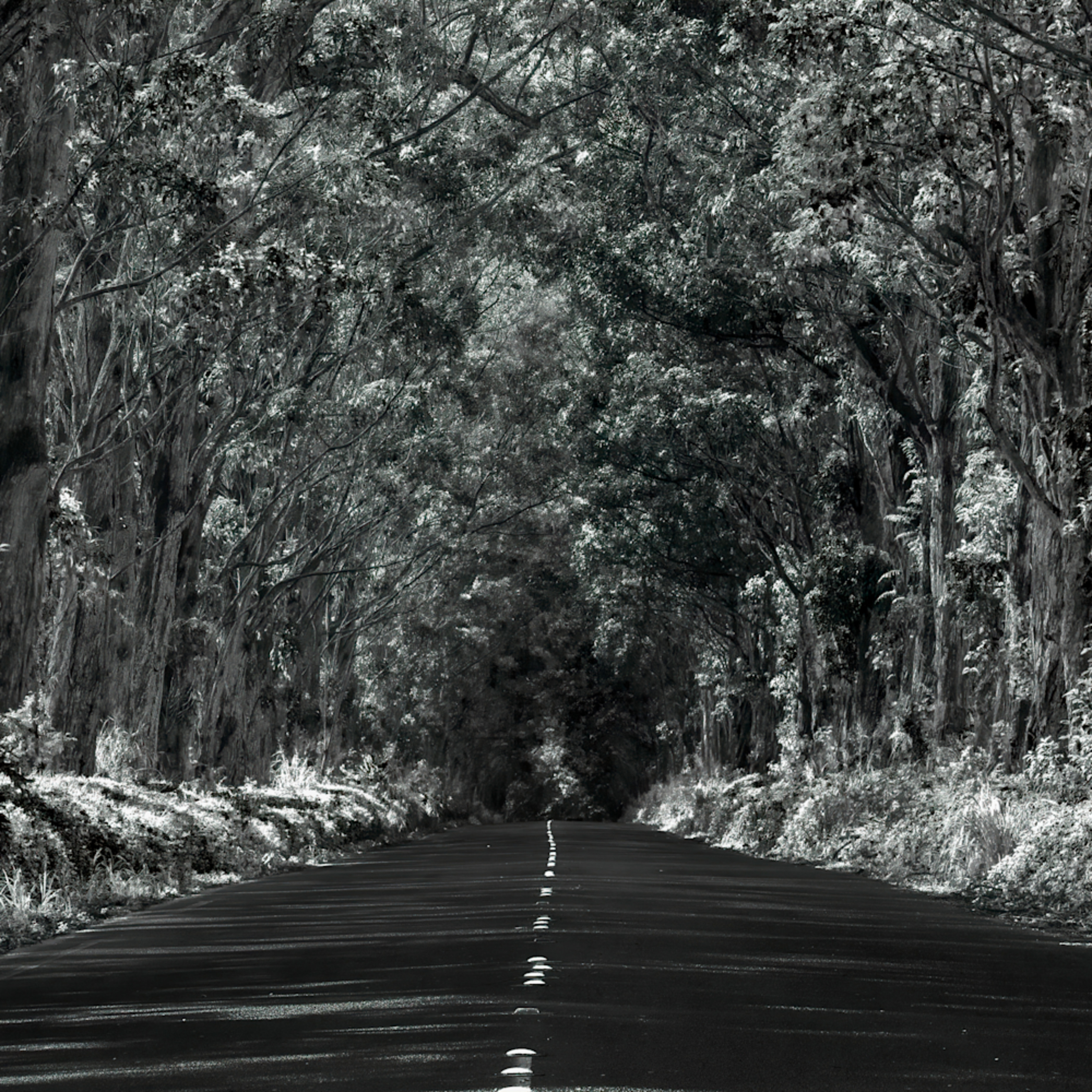 Infrared tunnel of trees xnzg1l