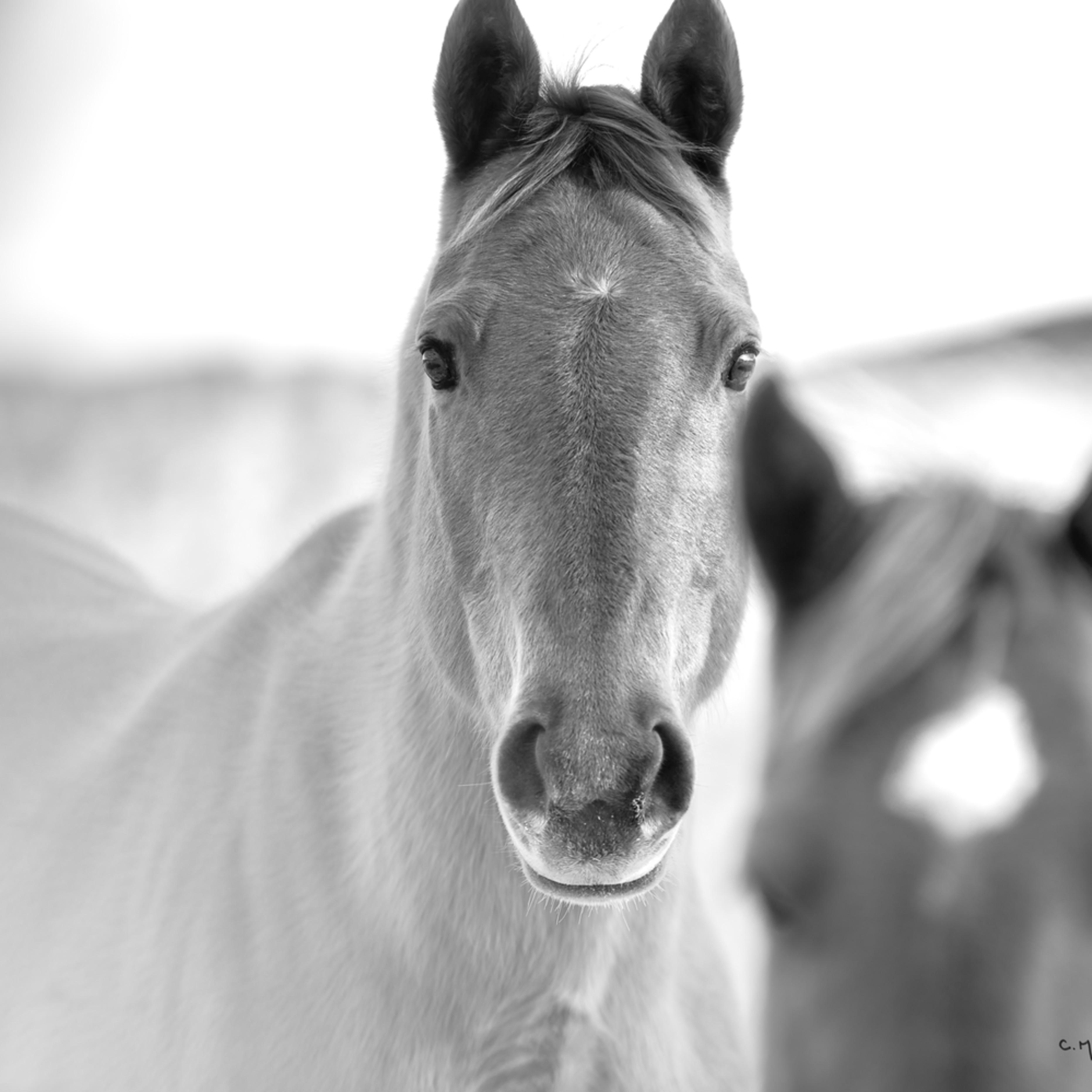 1245 faded horse 1.25 4654 x 3723 j100argb s2blko80p4h4v3rt 20190213 1602 gujqjk