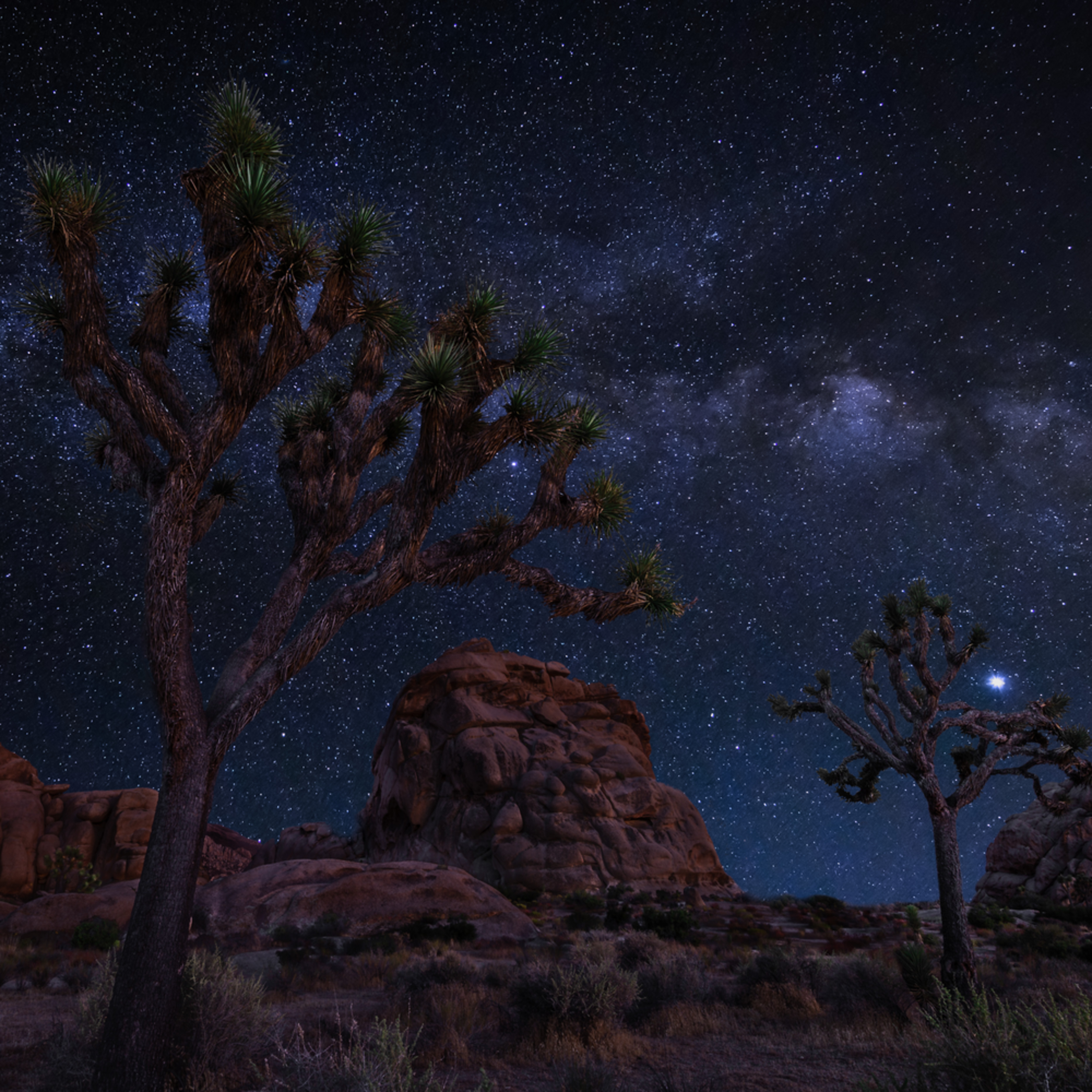 Joshua tree starlight bnl8qd