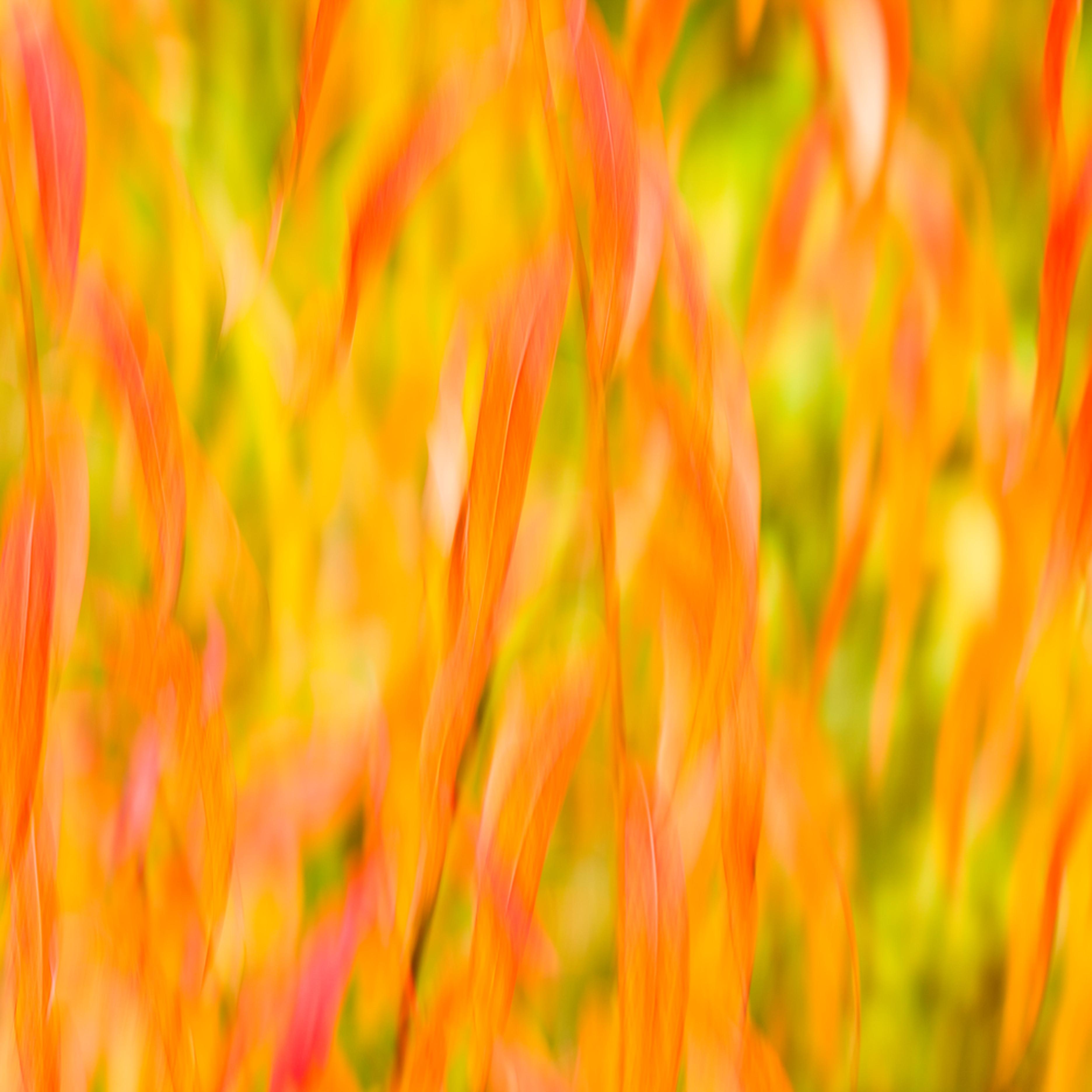 20110917 wildflowers mg2854 artstorefronts apqg4x