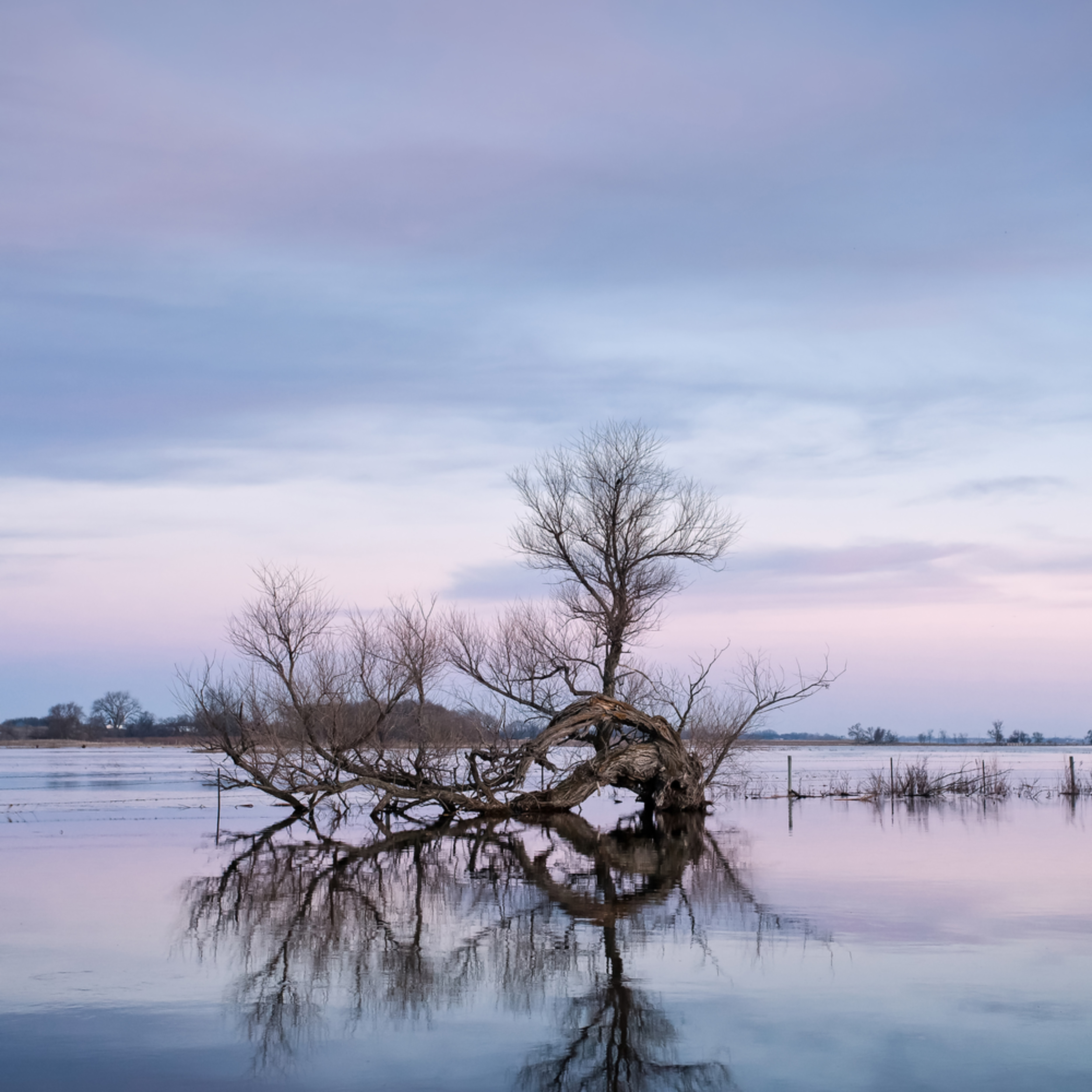 Mornings flooded tree reflection njicgg