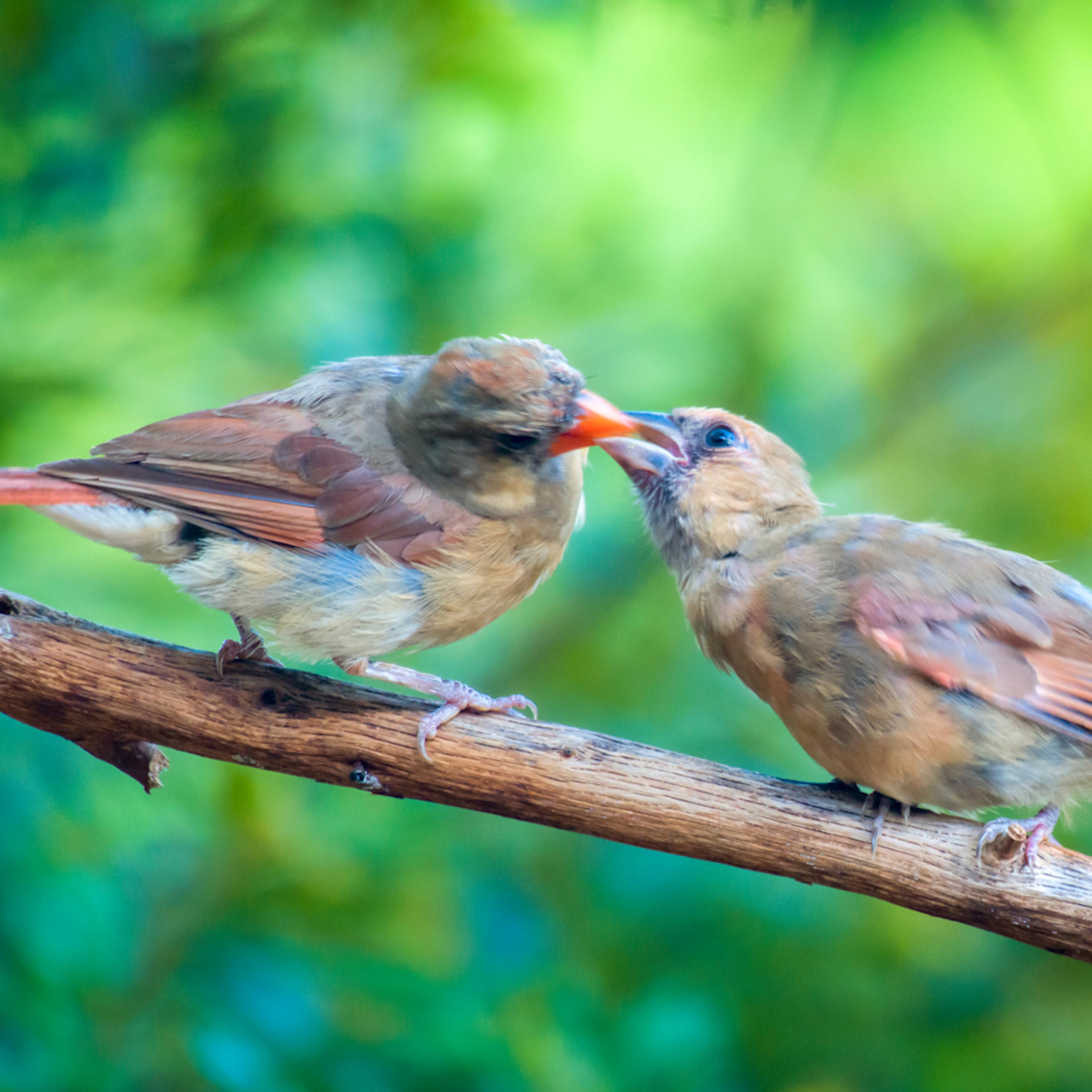Backyard birds   aug2019  2 20190821 0040 q79jpq
