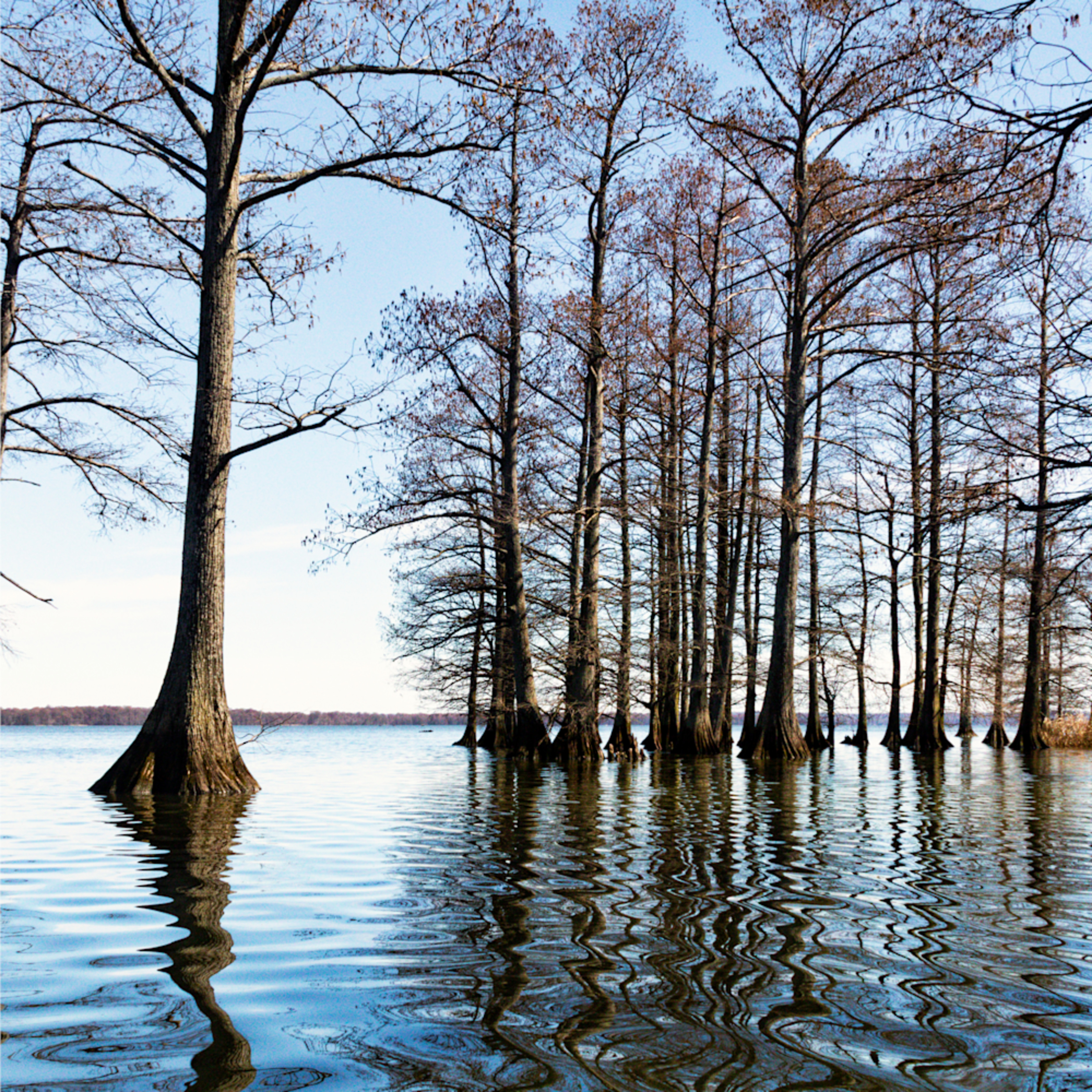 Cypress trees reflection  mg 5516fs healthcare art xpeskn
