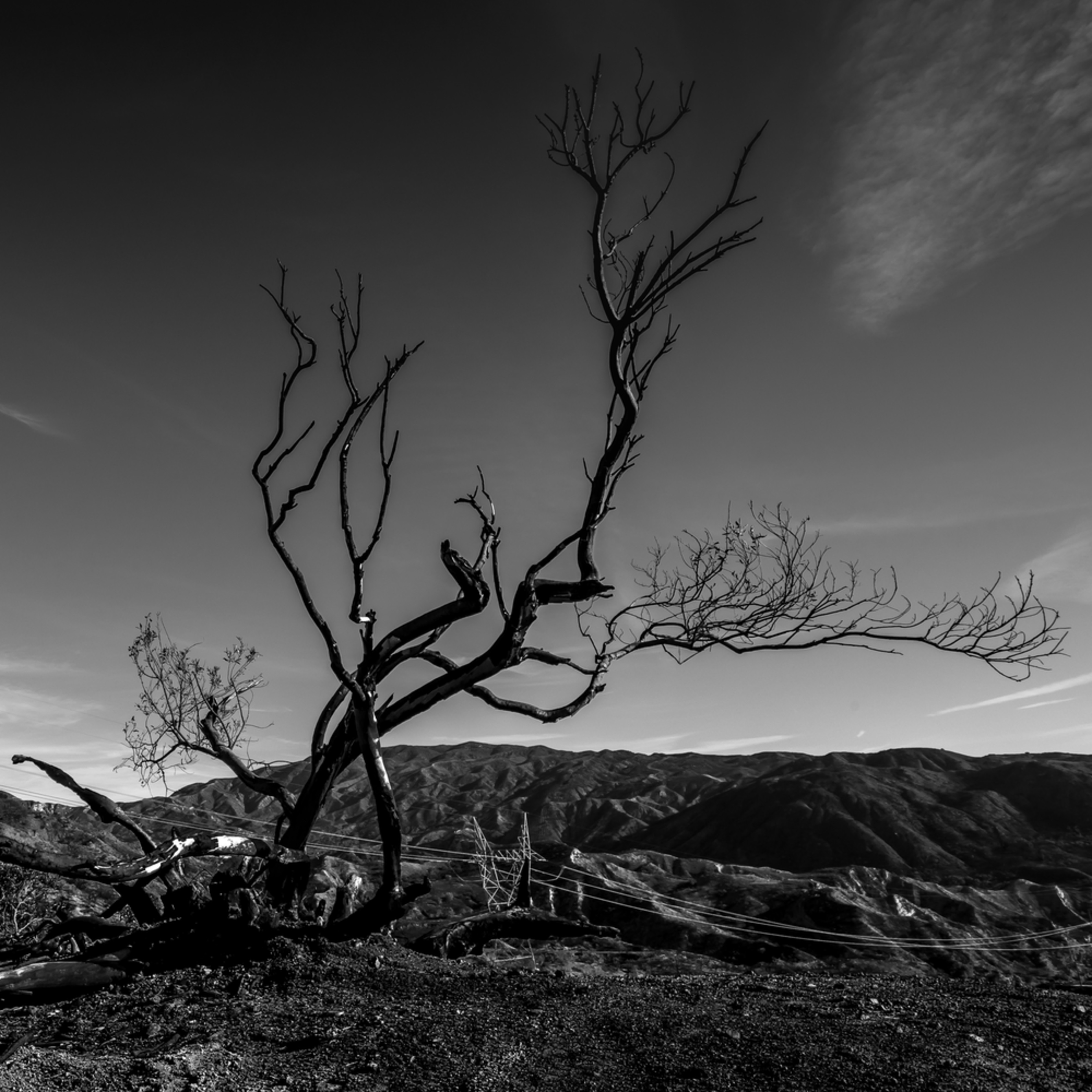 Remains of a tree after the fire big tujunga 2018 eqqs0b