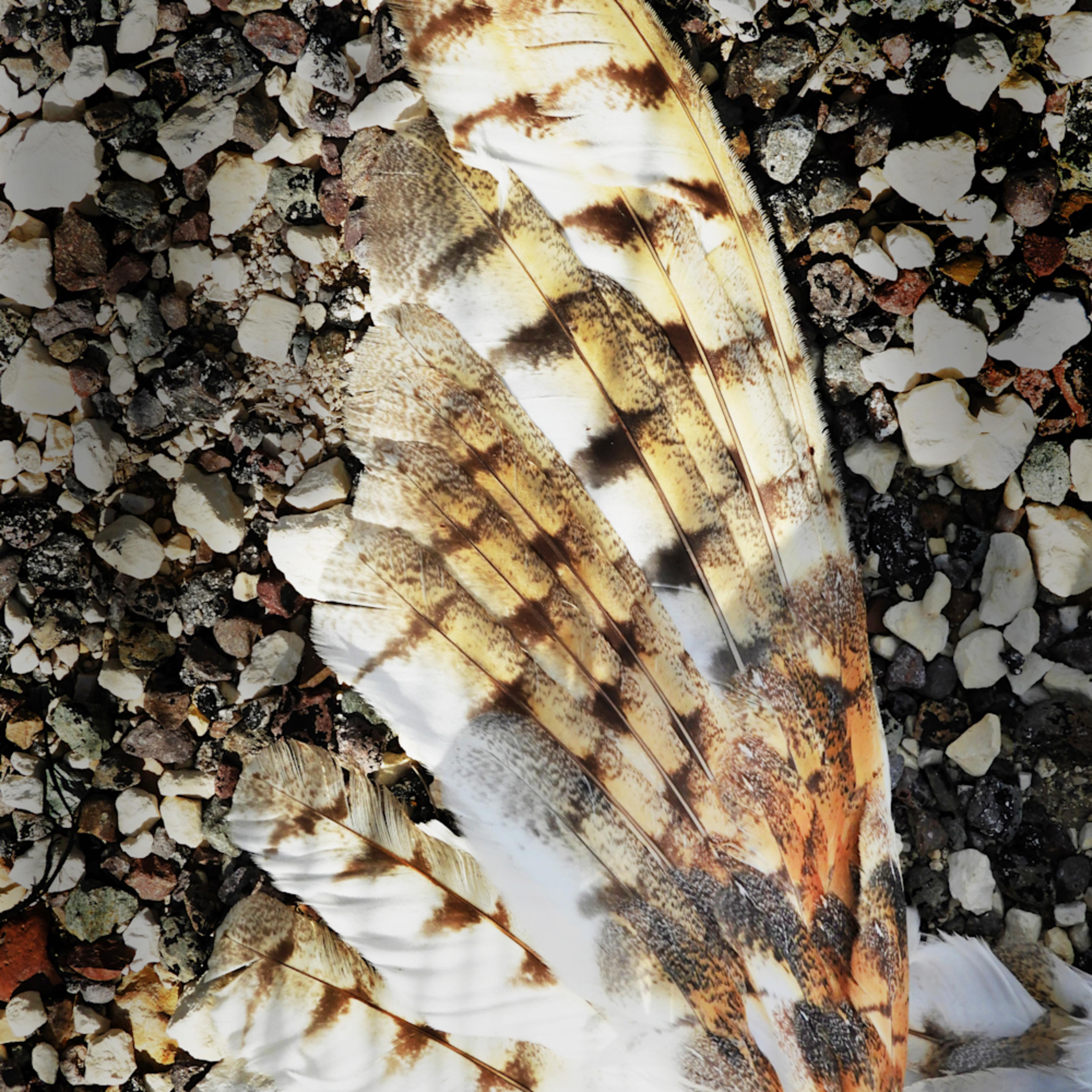 Dscn3094 owl wing hn4ehg