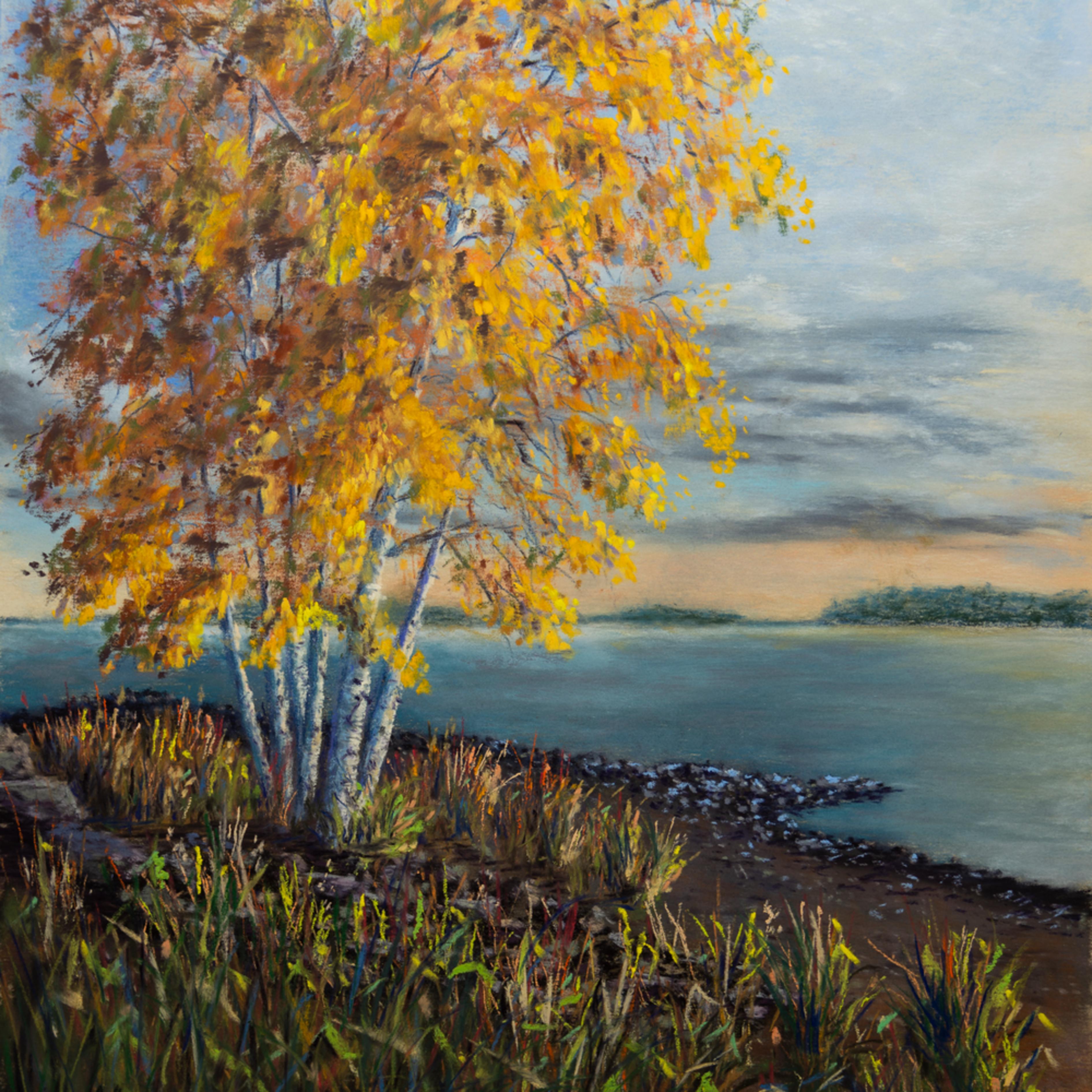 Autumn birches wb10gr