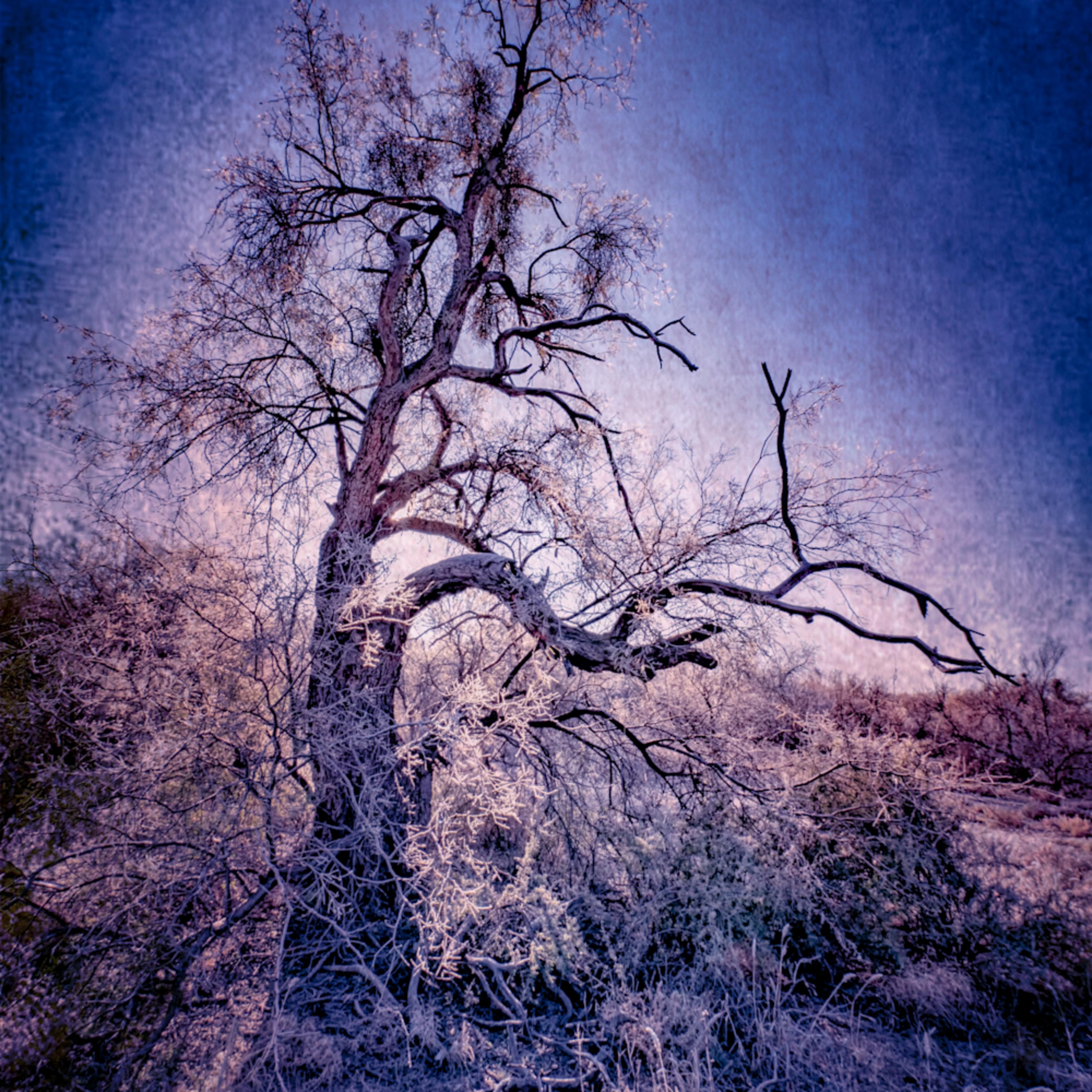 Old man winter blues rrwstp