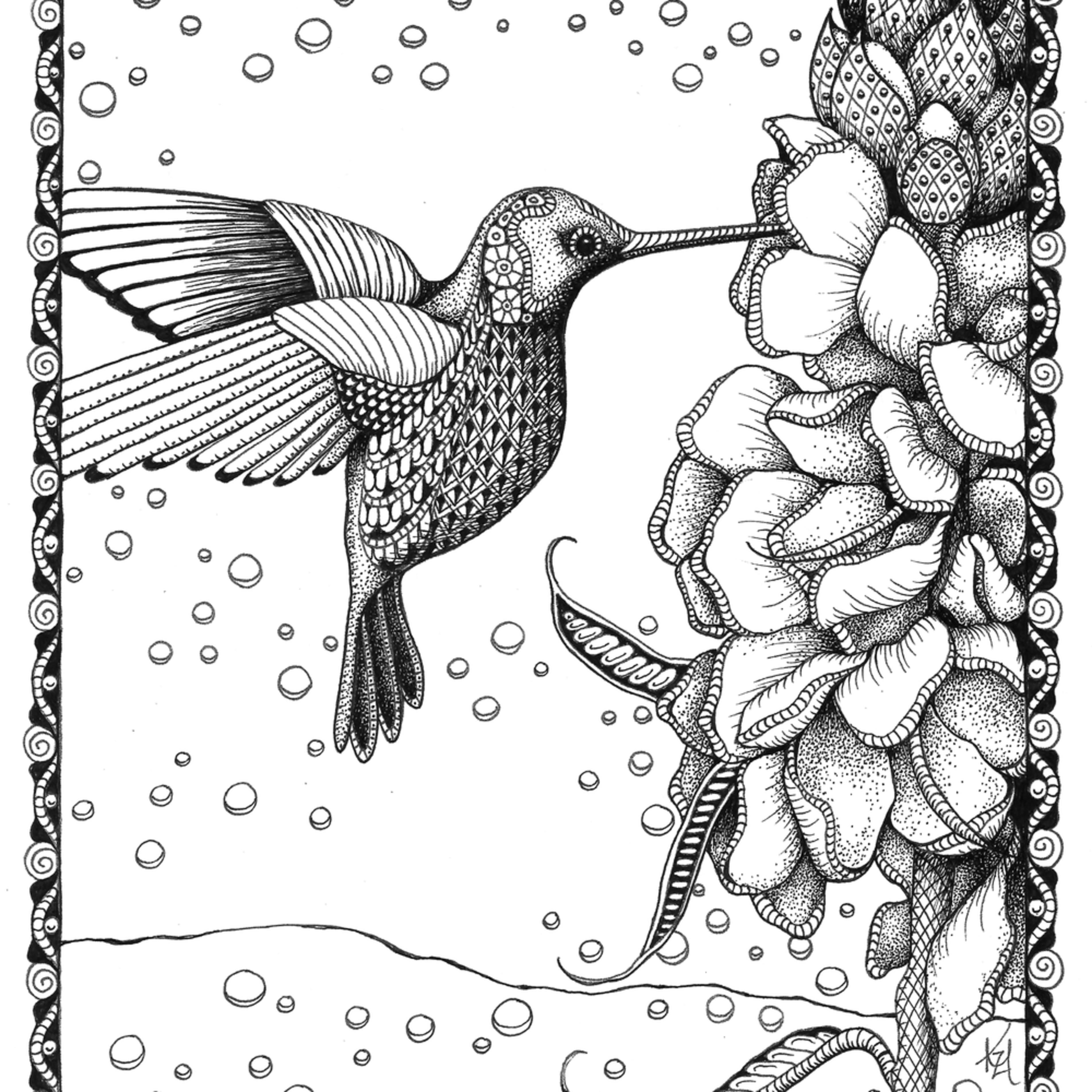 Hummingbird gladiolas cn1oxf