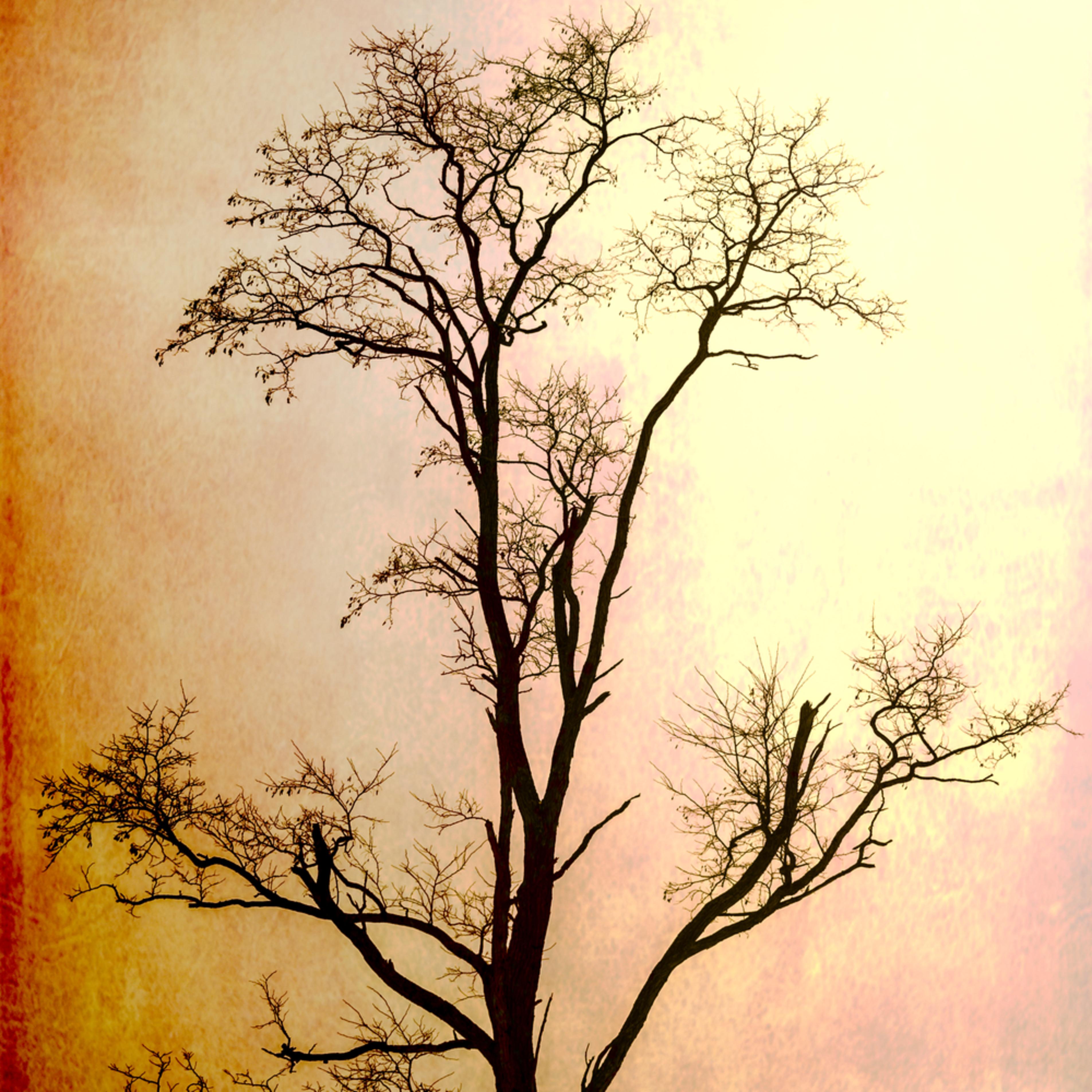 Arbor five bgdv3q