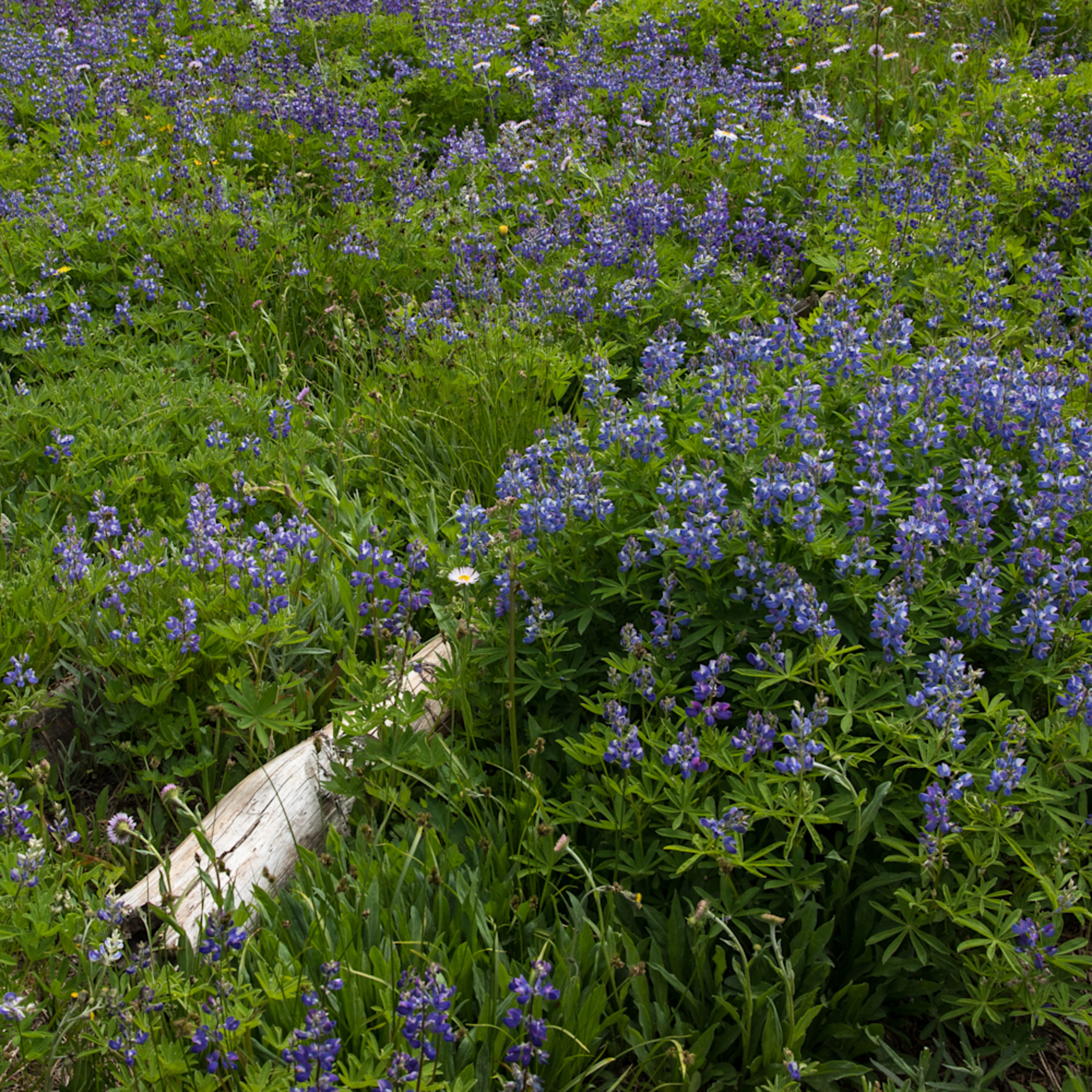 Field of flowers with log vnh2ym
