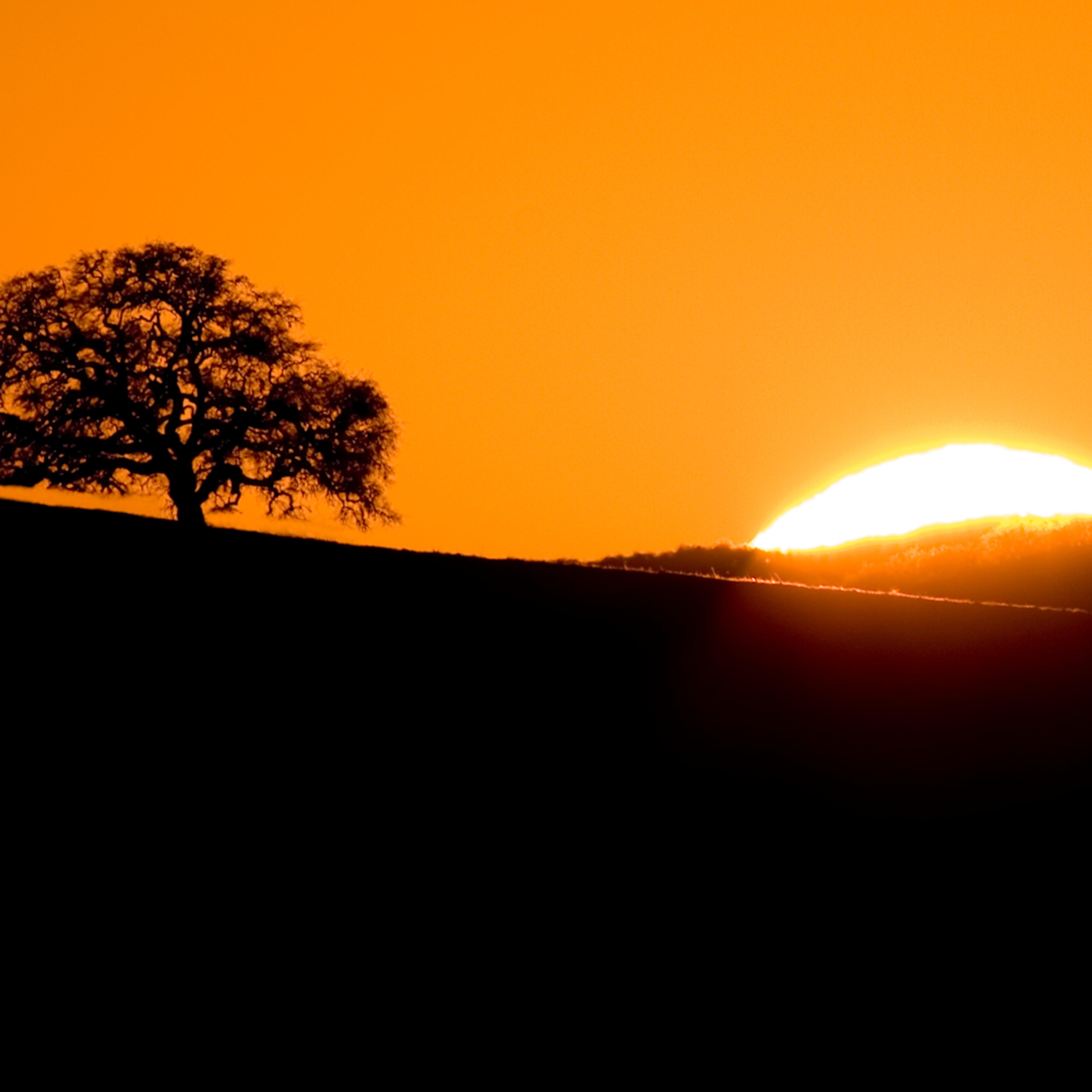 Sunset oak hjg2jk