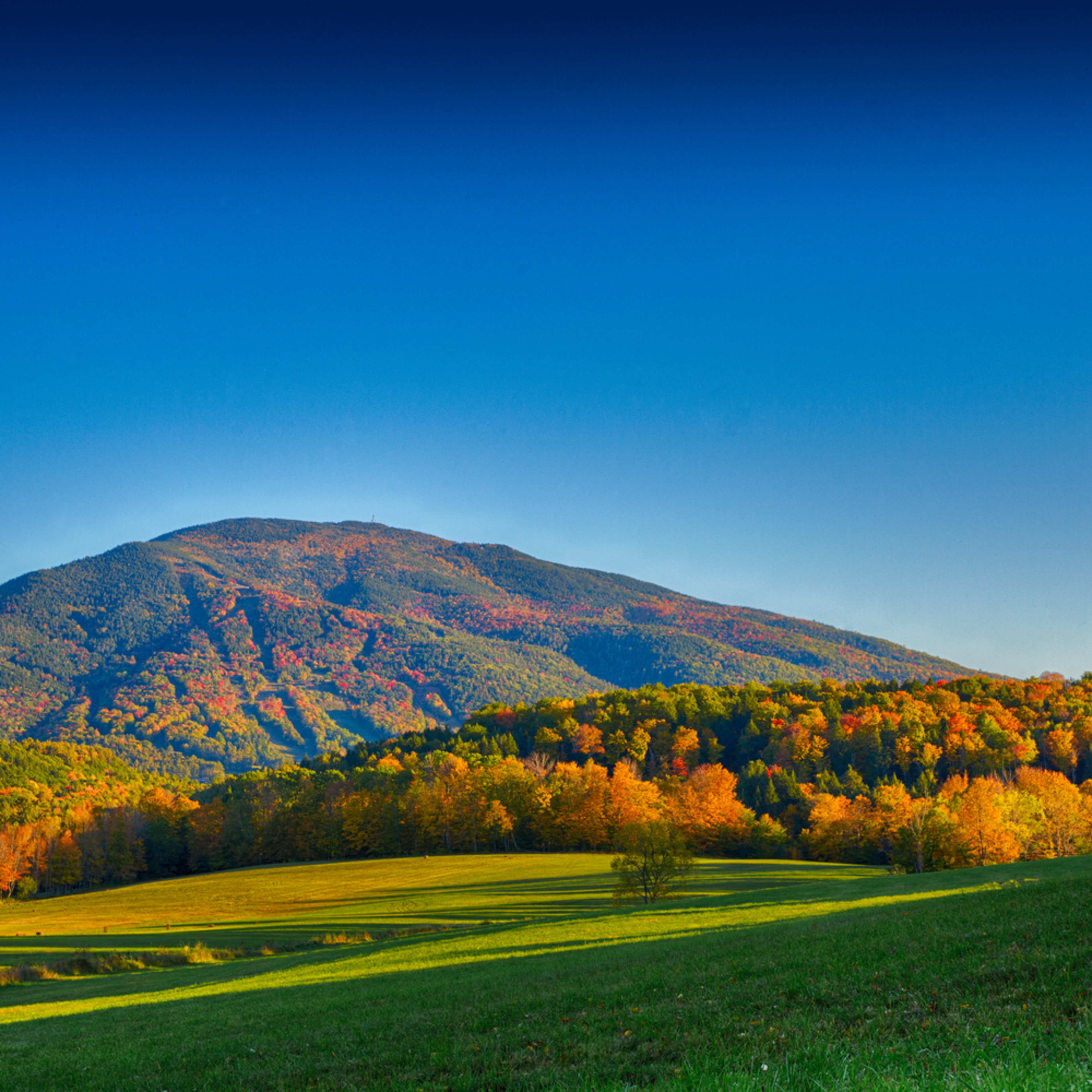Late afternoon fall walks in vermont dvruqr