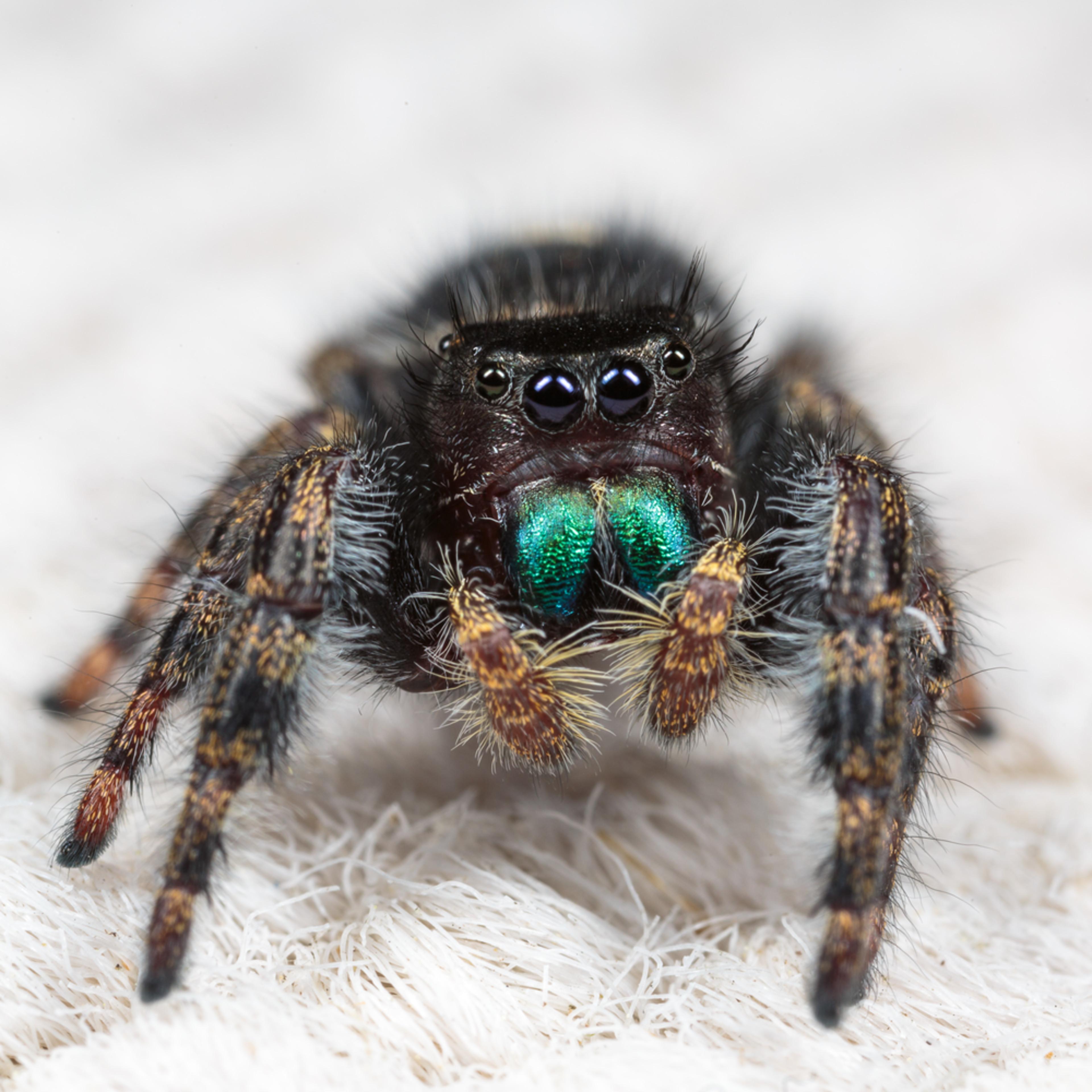 20160829 spider id 00066 hnkyjb