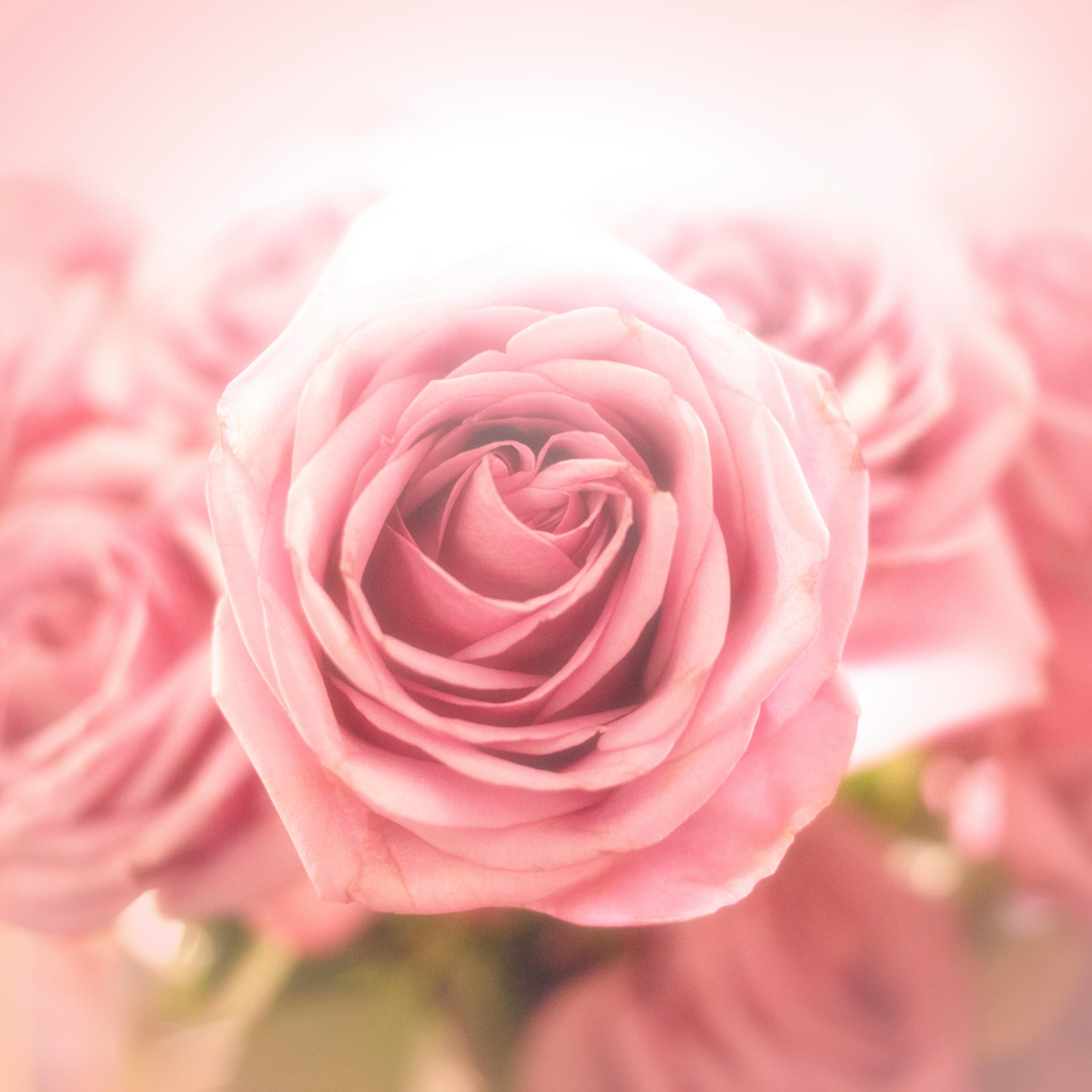 Flowers  mavtwv