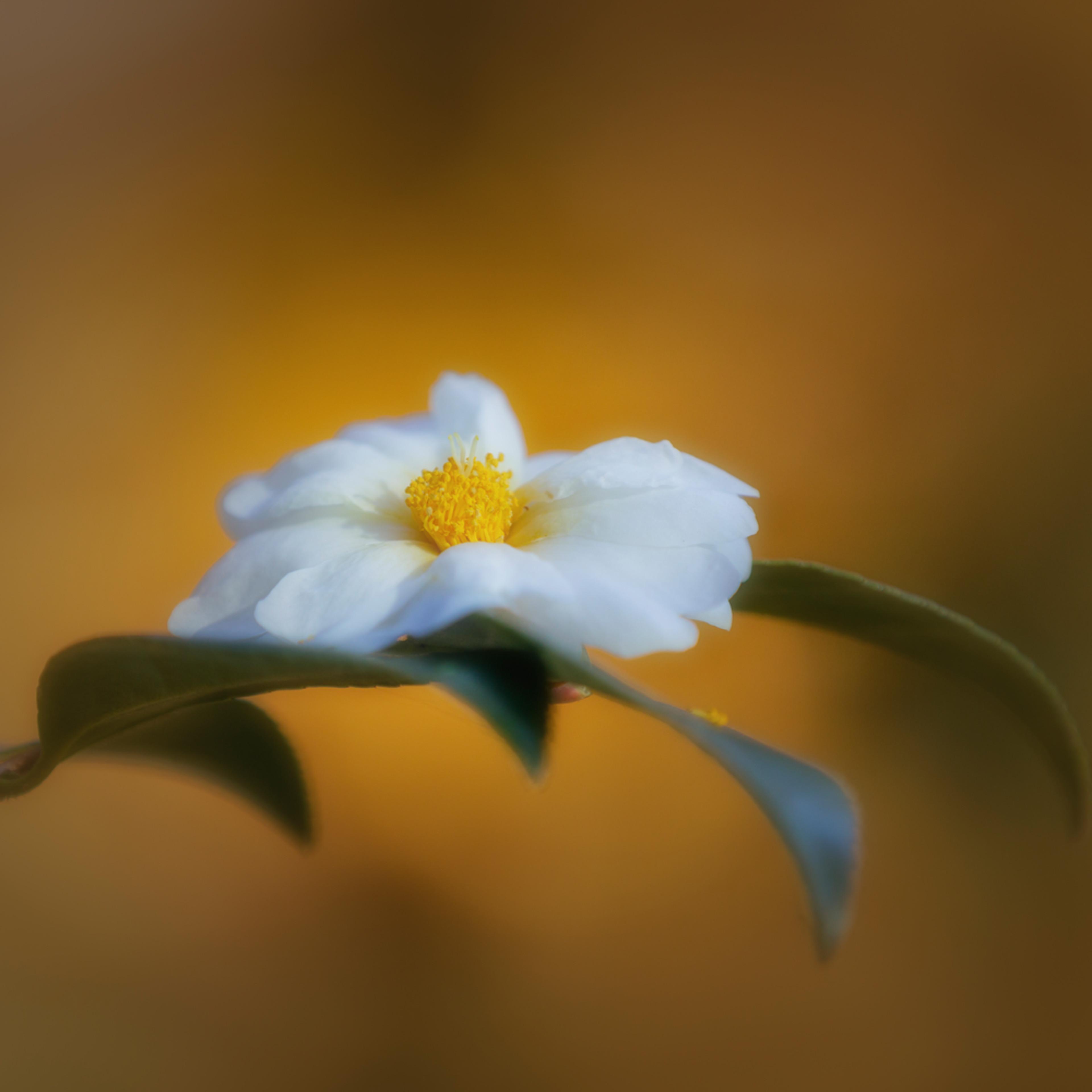 Flowers  16 etwlyy