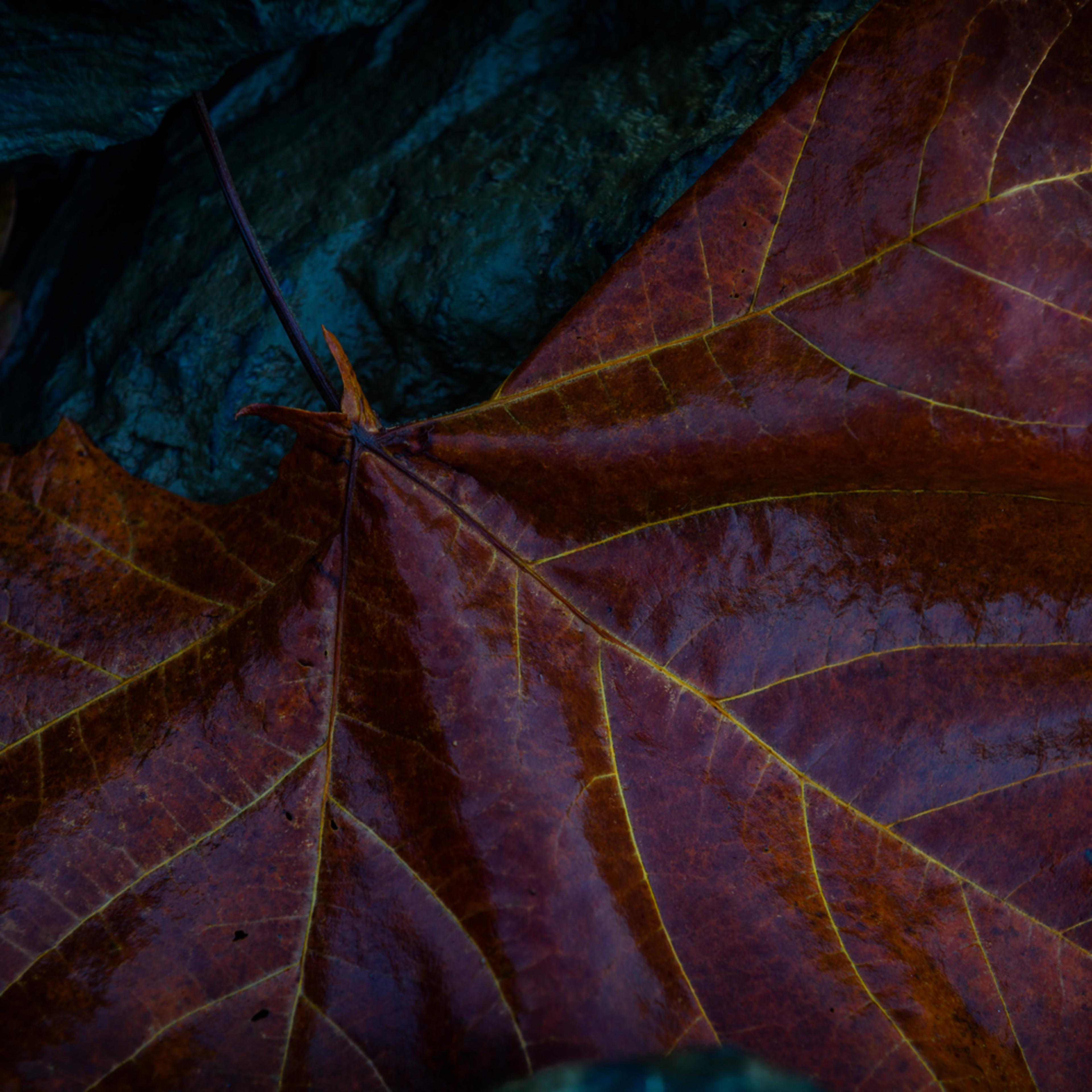 Leaves 2 llnrum