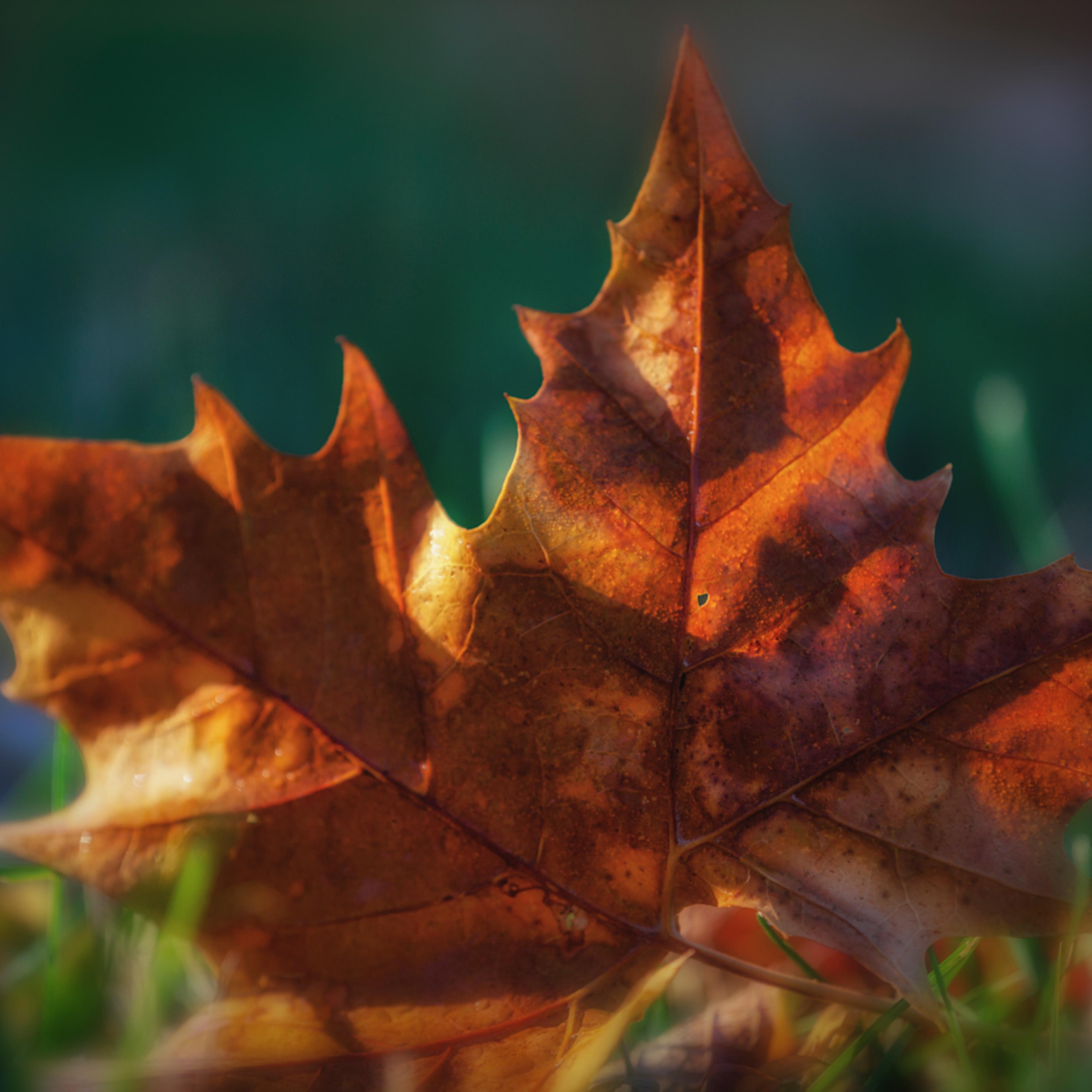 Leaves 2 5 hj3g9u