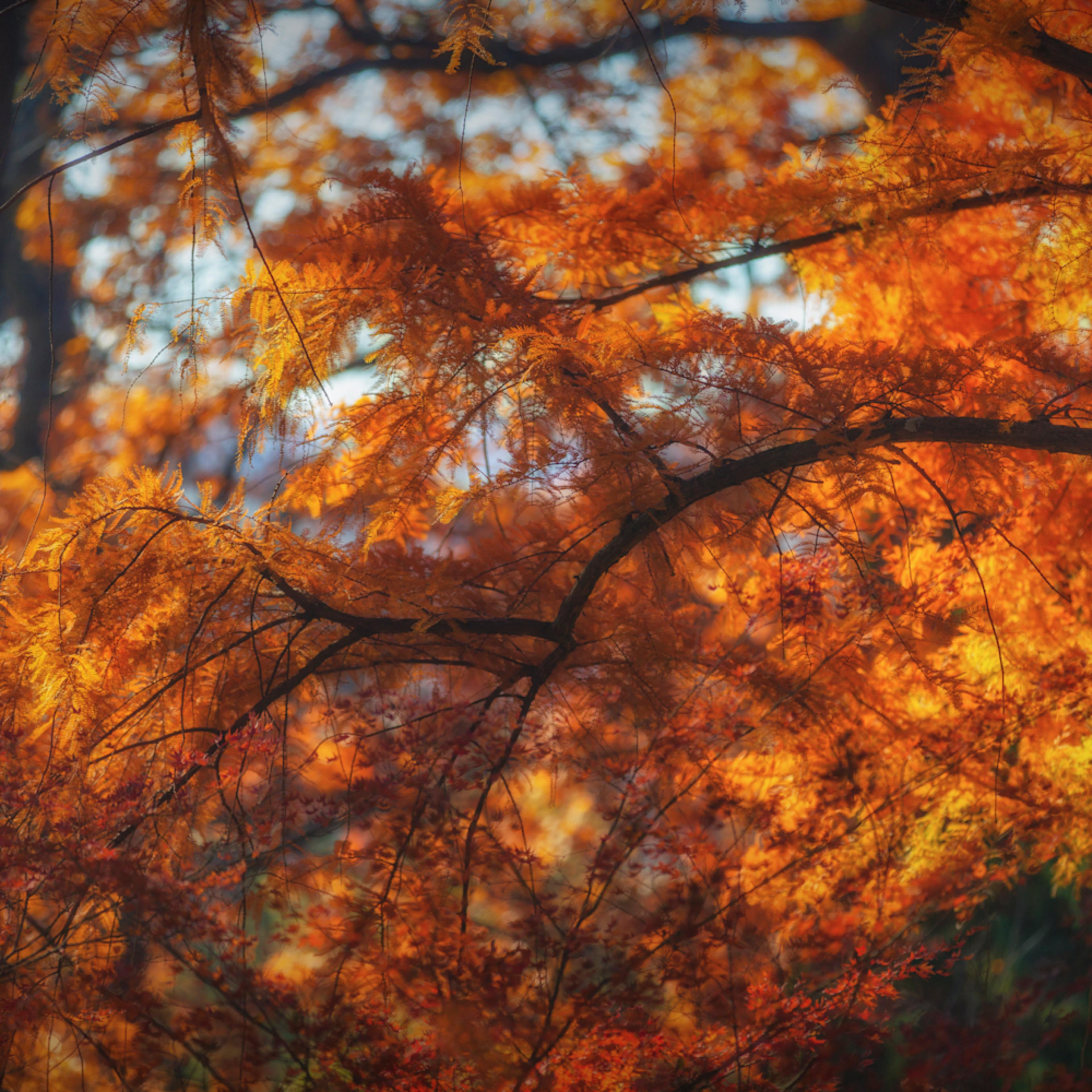 Leaves 2 4 plwrys