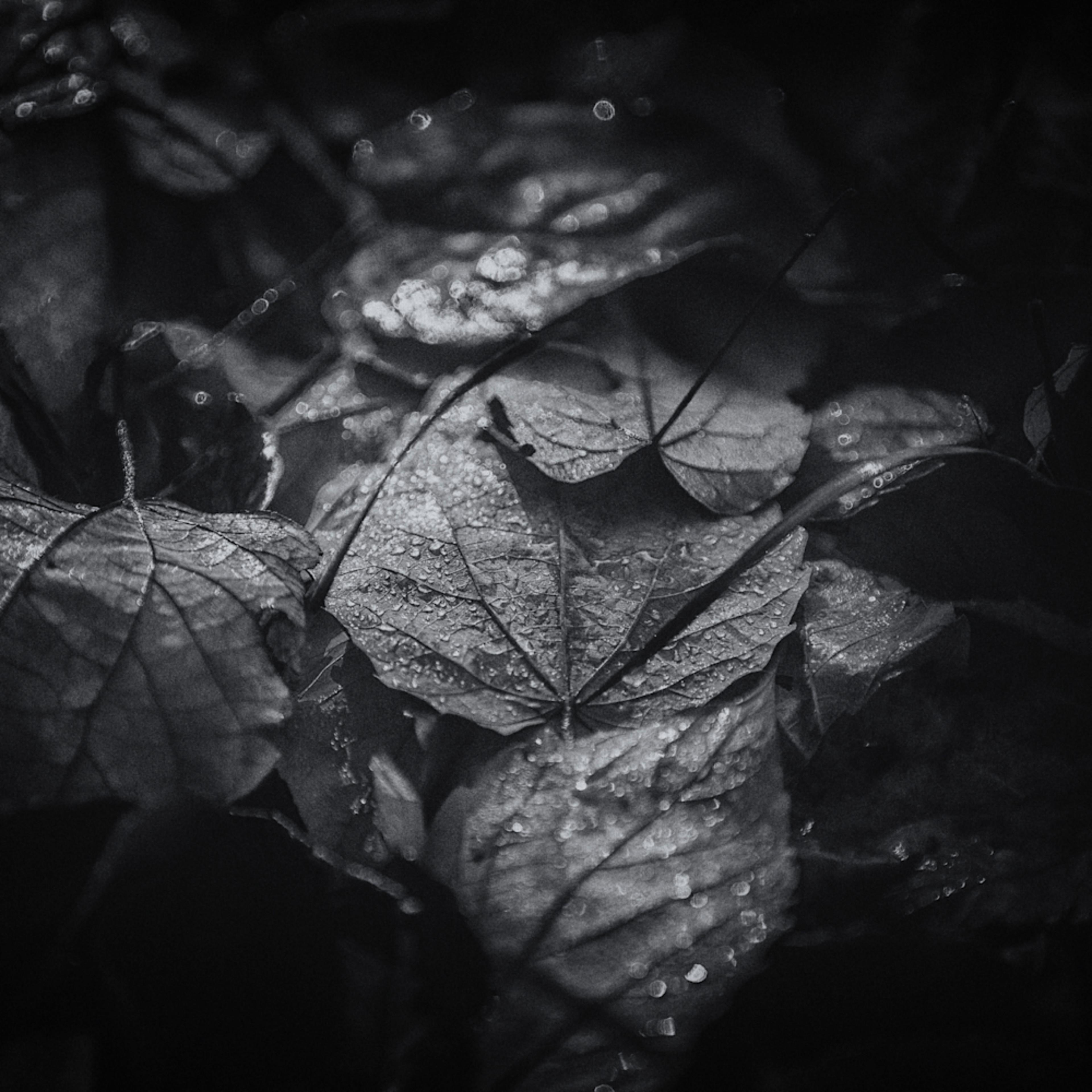 Leaves  15 lfzk1u