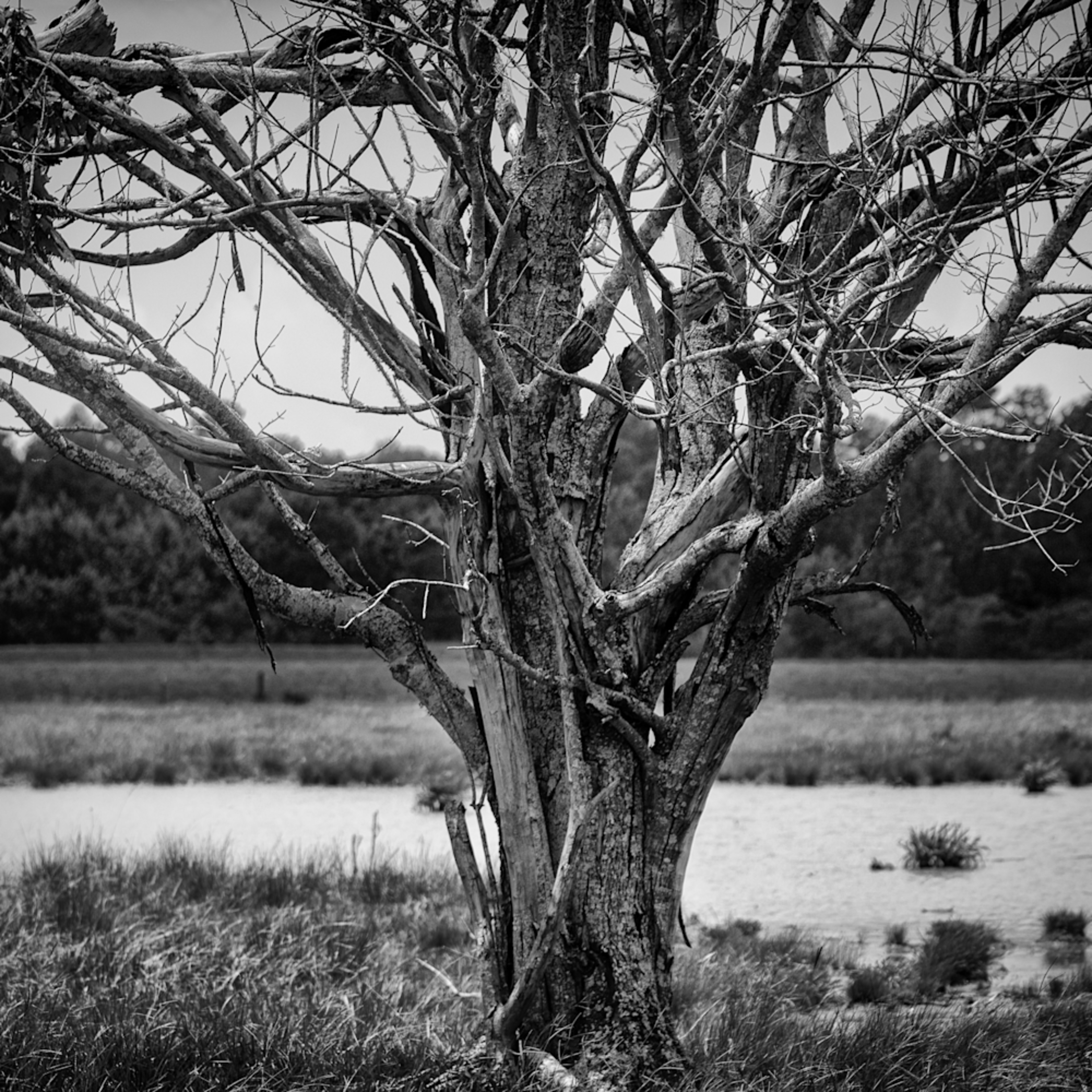 Trees  thh9bp