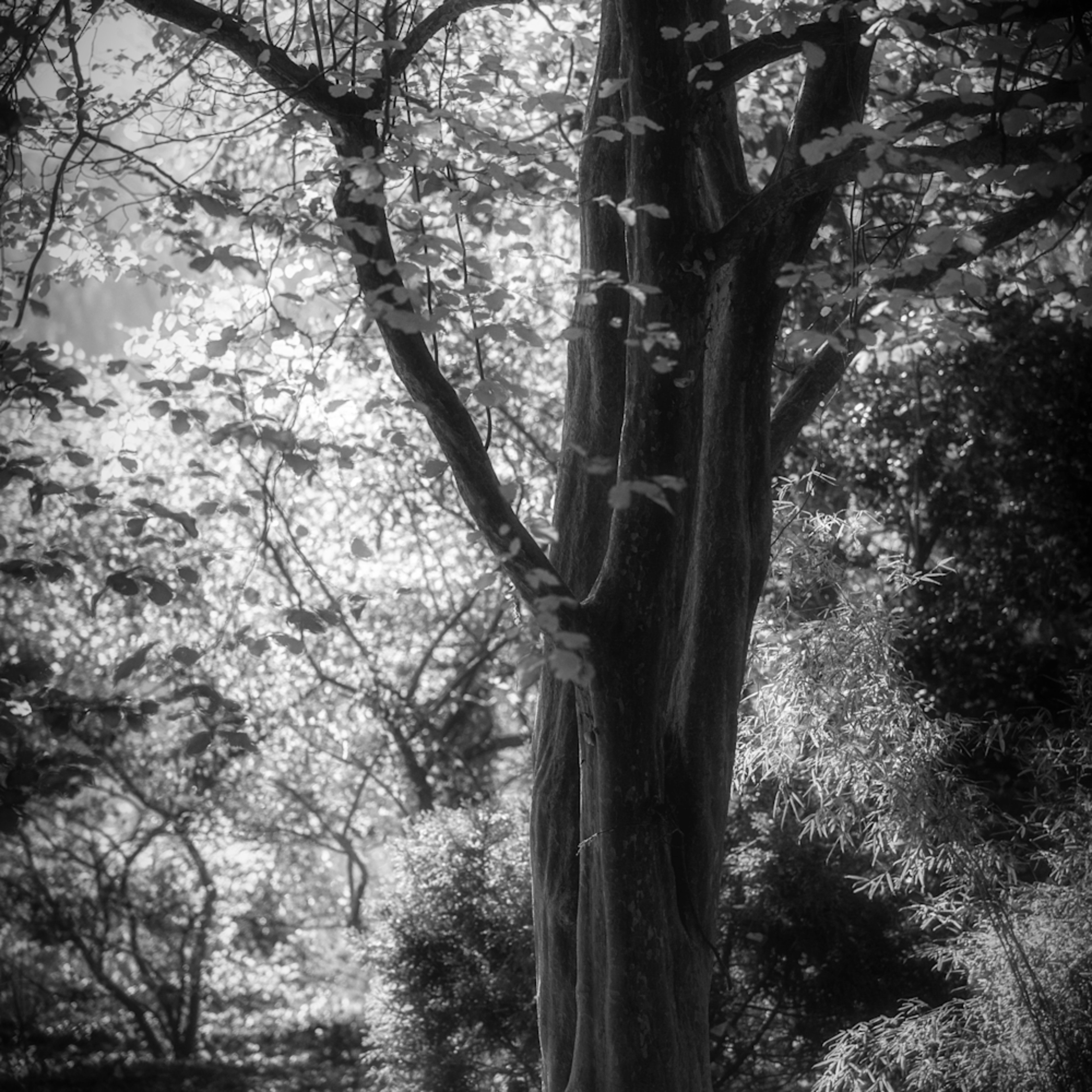 Trees  22 d4a2of