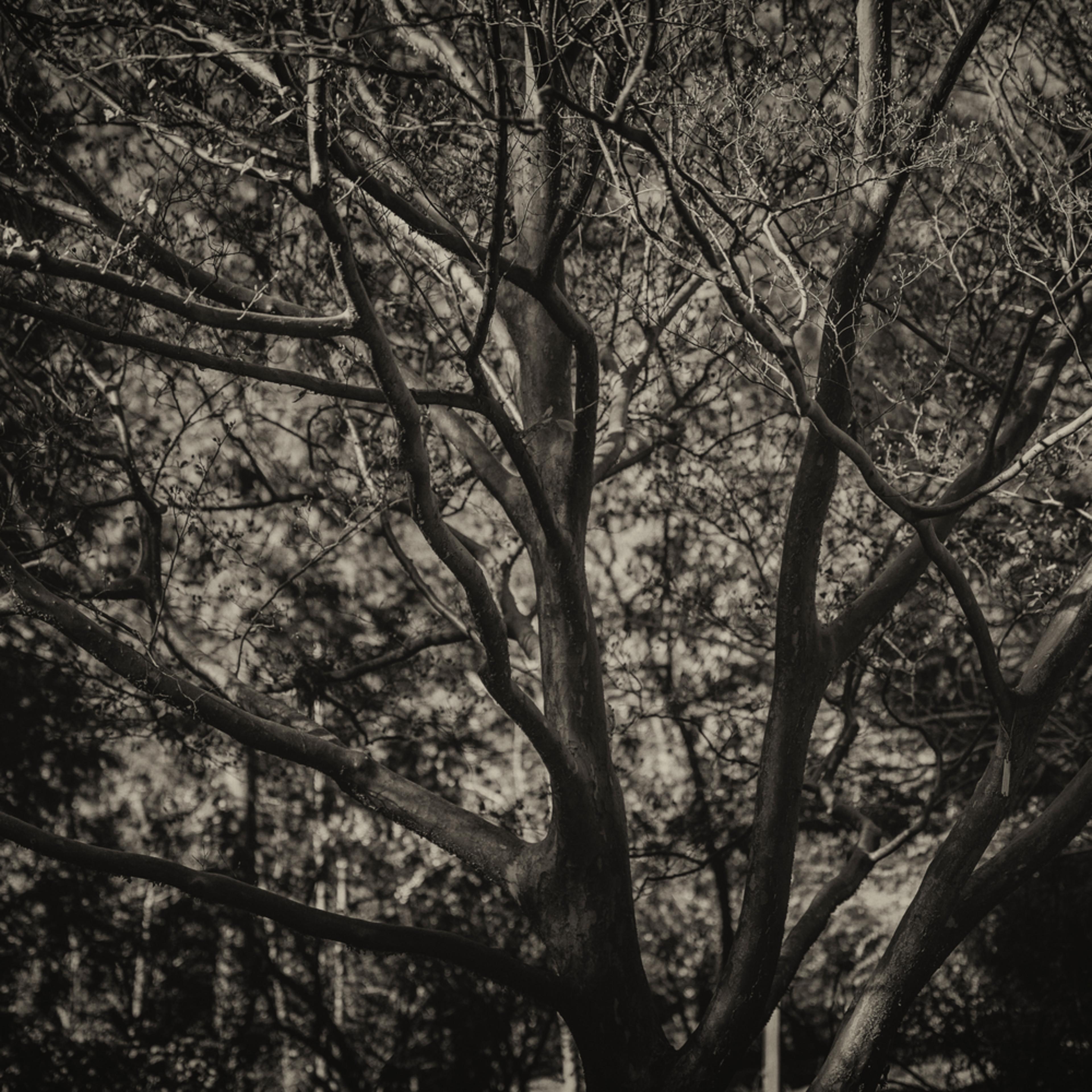 Trees  33 ilcuae