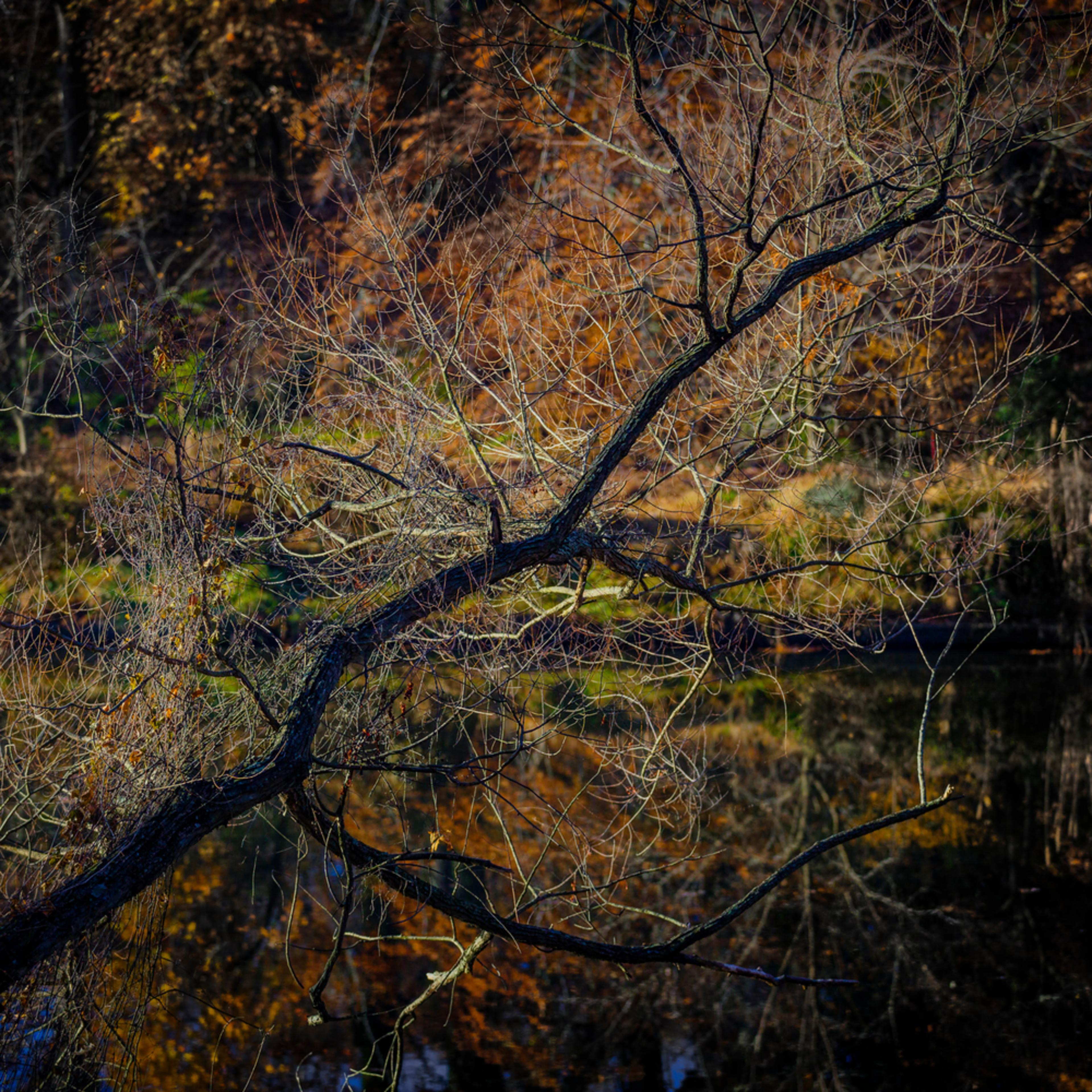 Trees 0660 nfh1zr
