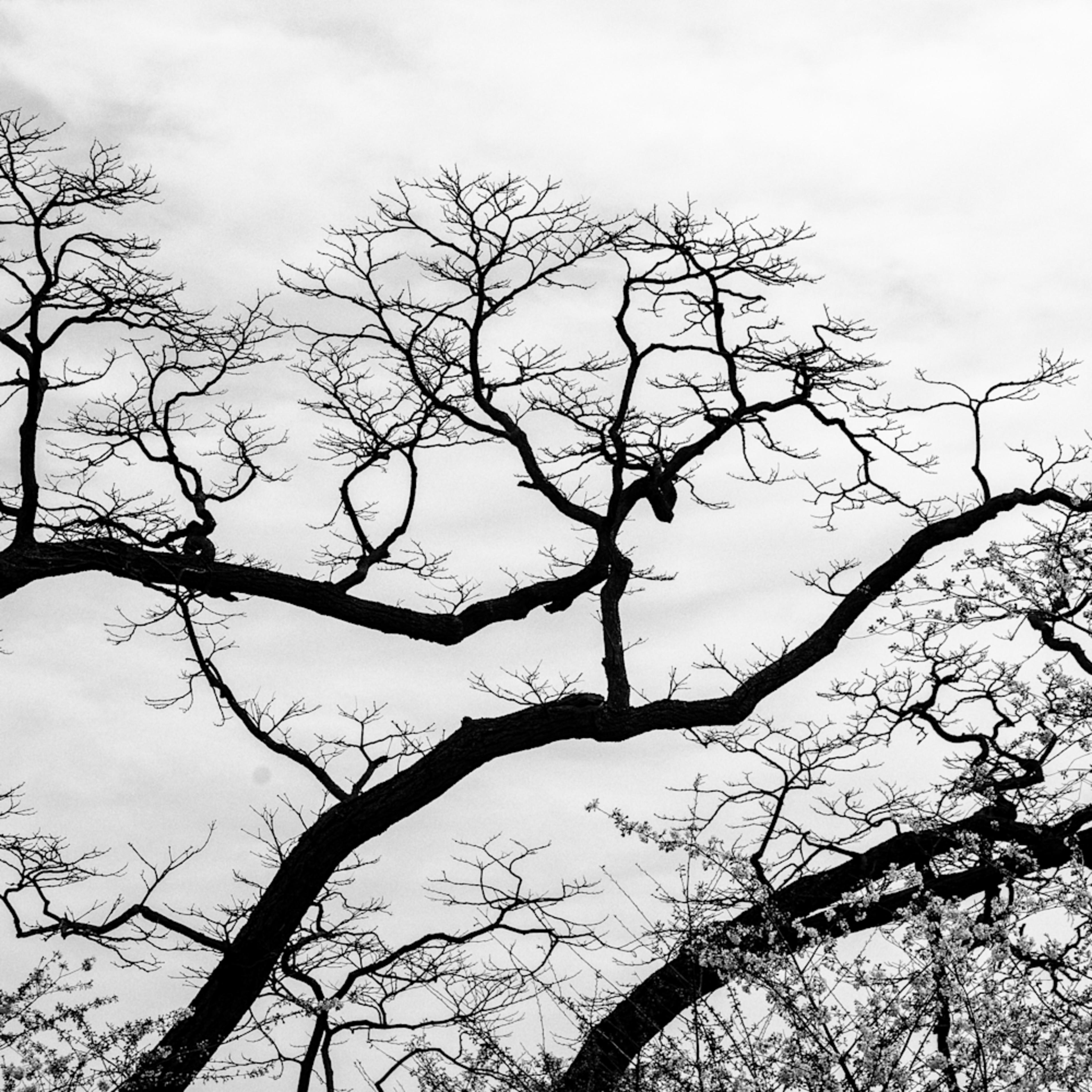 Trees  40 ntj2pj